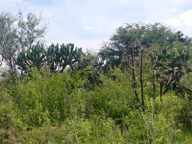 Additional photo for property listing at La Cieniguita near Otomi Country Property, San Miguel De Allende, Guanajuato México