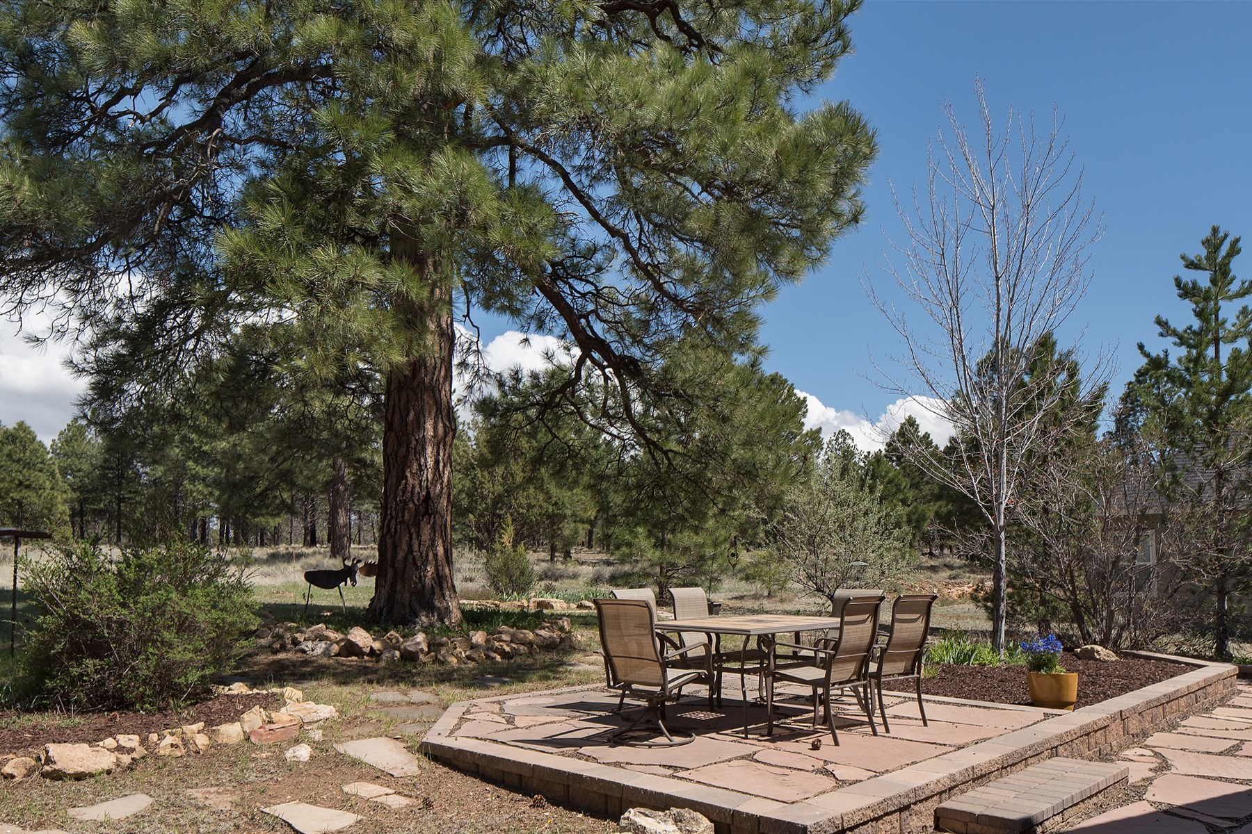 Single Family Home for Sale at Backing State Land, this open and inviting single level home 2008 N Fox Hill Rd Flagstaff, Arizona, 86004 United States