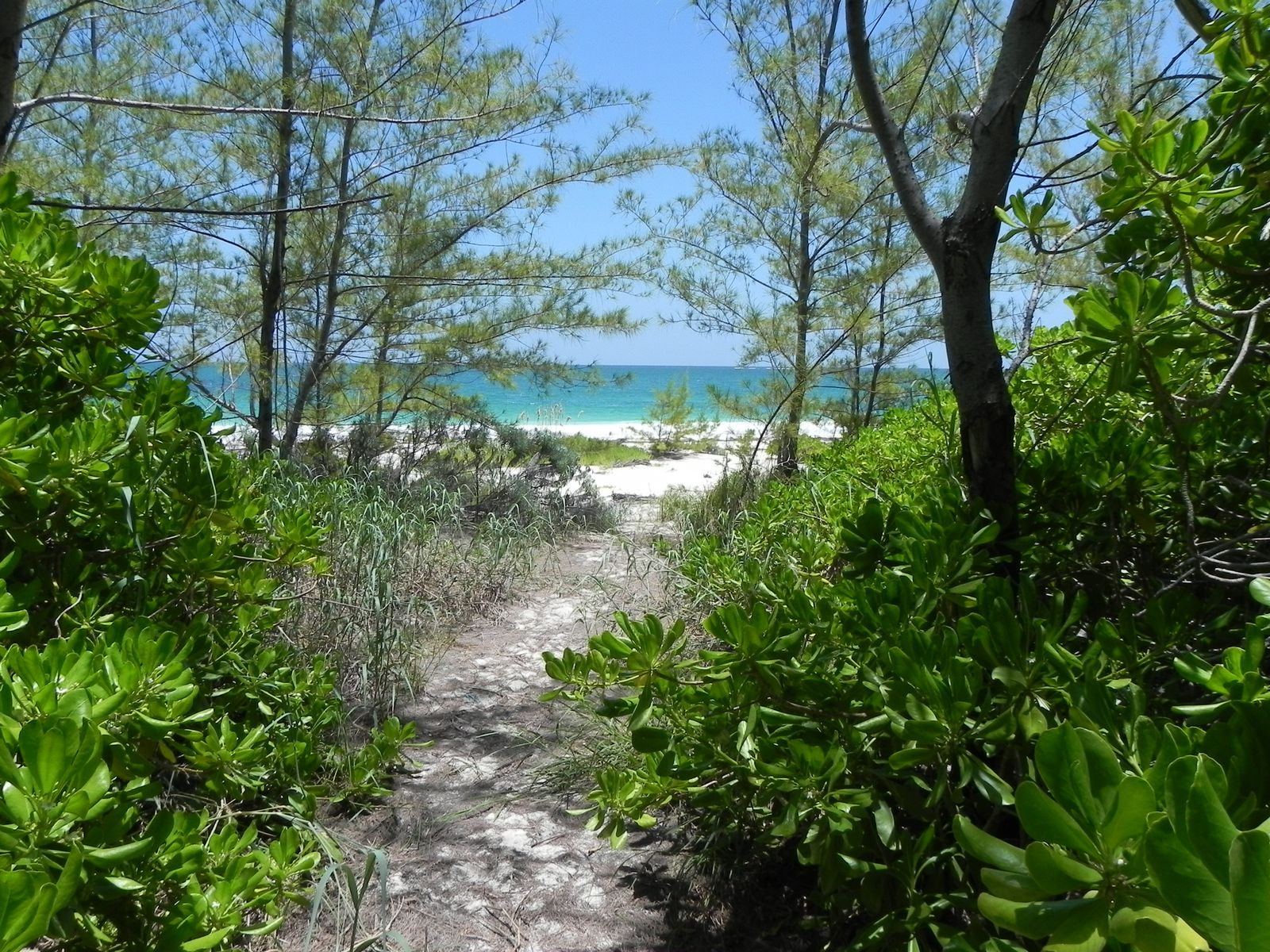 Terreno por un Venta en Bahama Palm Shores Lot 16 Bahama Palm Shores, Abaco, Bahamas