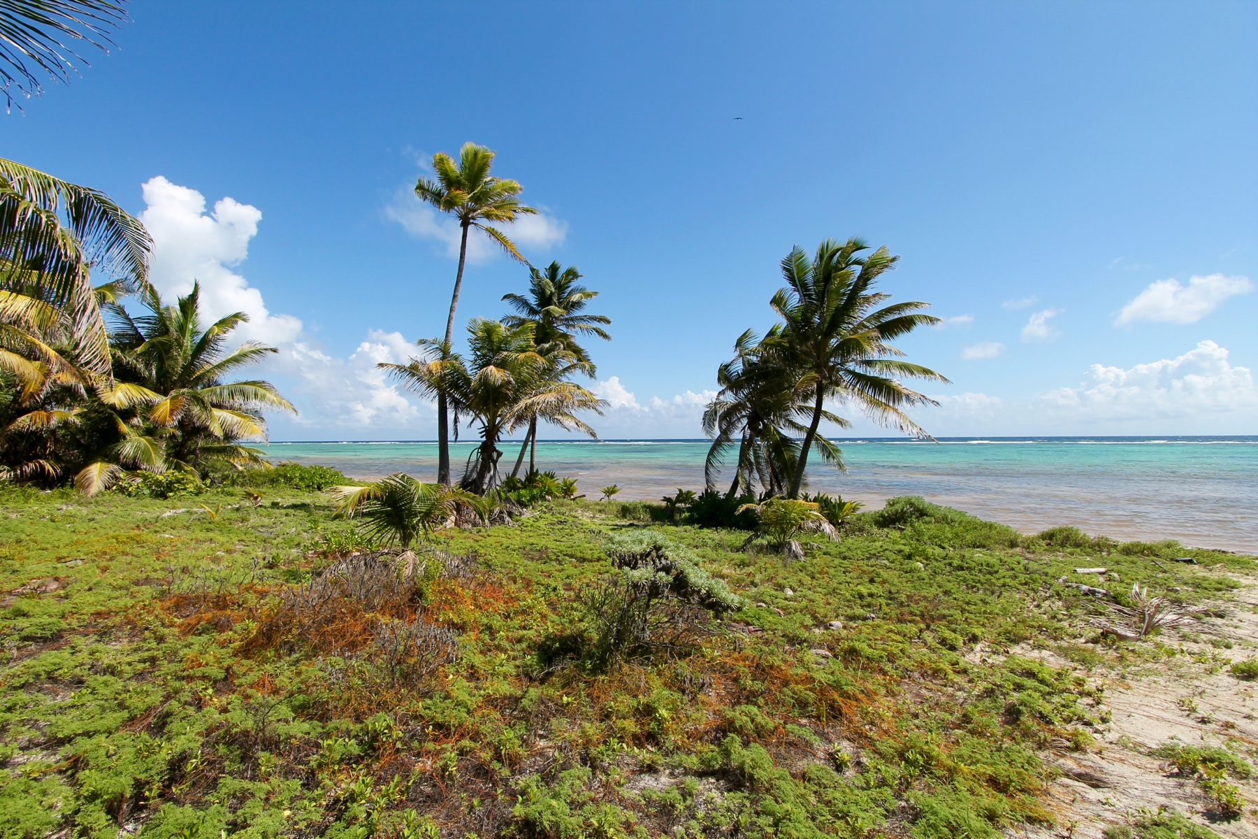 土地 のために 売買 アット 3.33 Pristine Acres Located 12 Miles North of San Pedro Town San Pedro Town, Ambergris Caye, ベリーズ