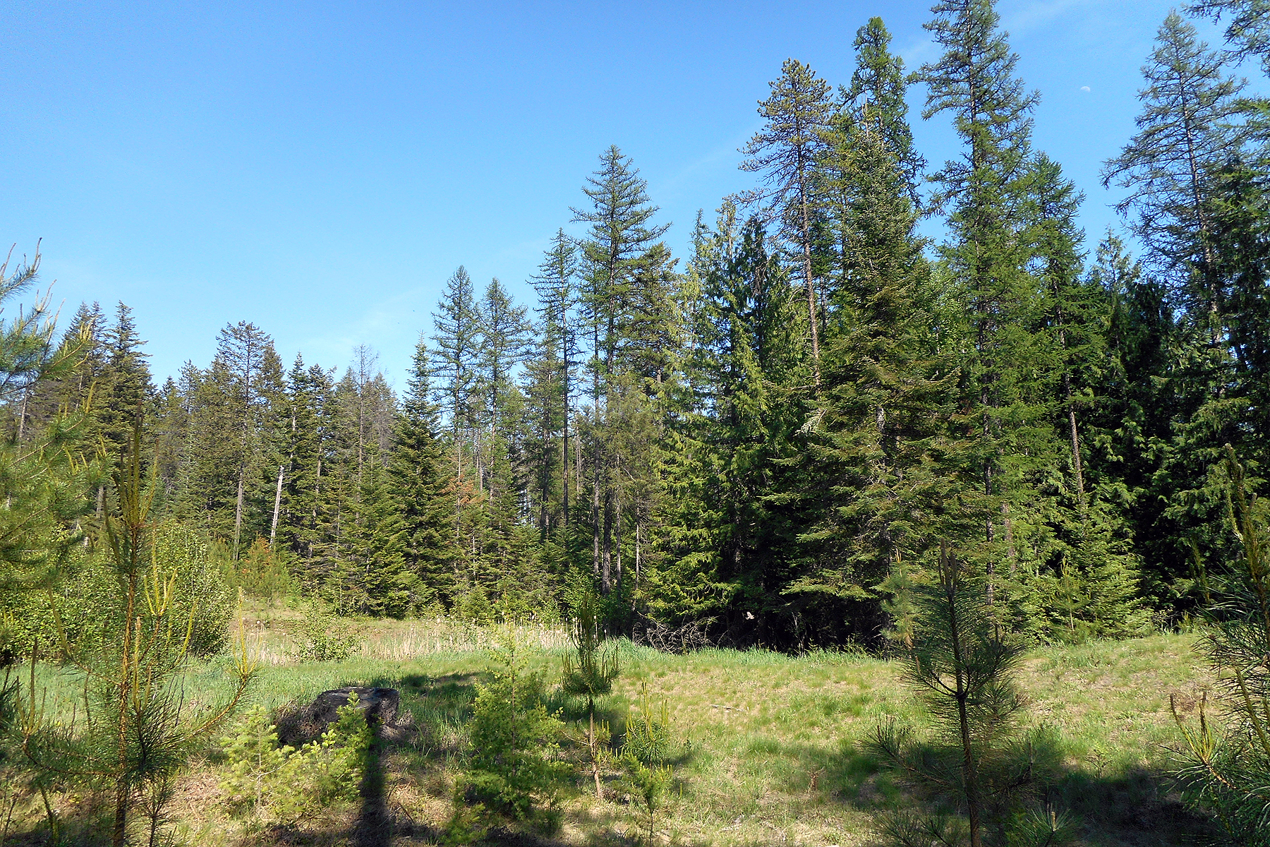 Property Of 4.7 forested acres bordering State Land
