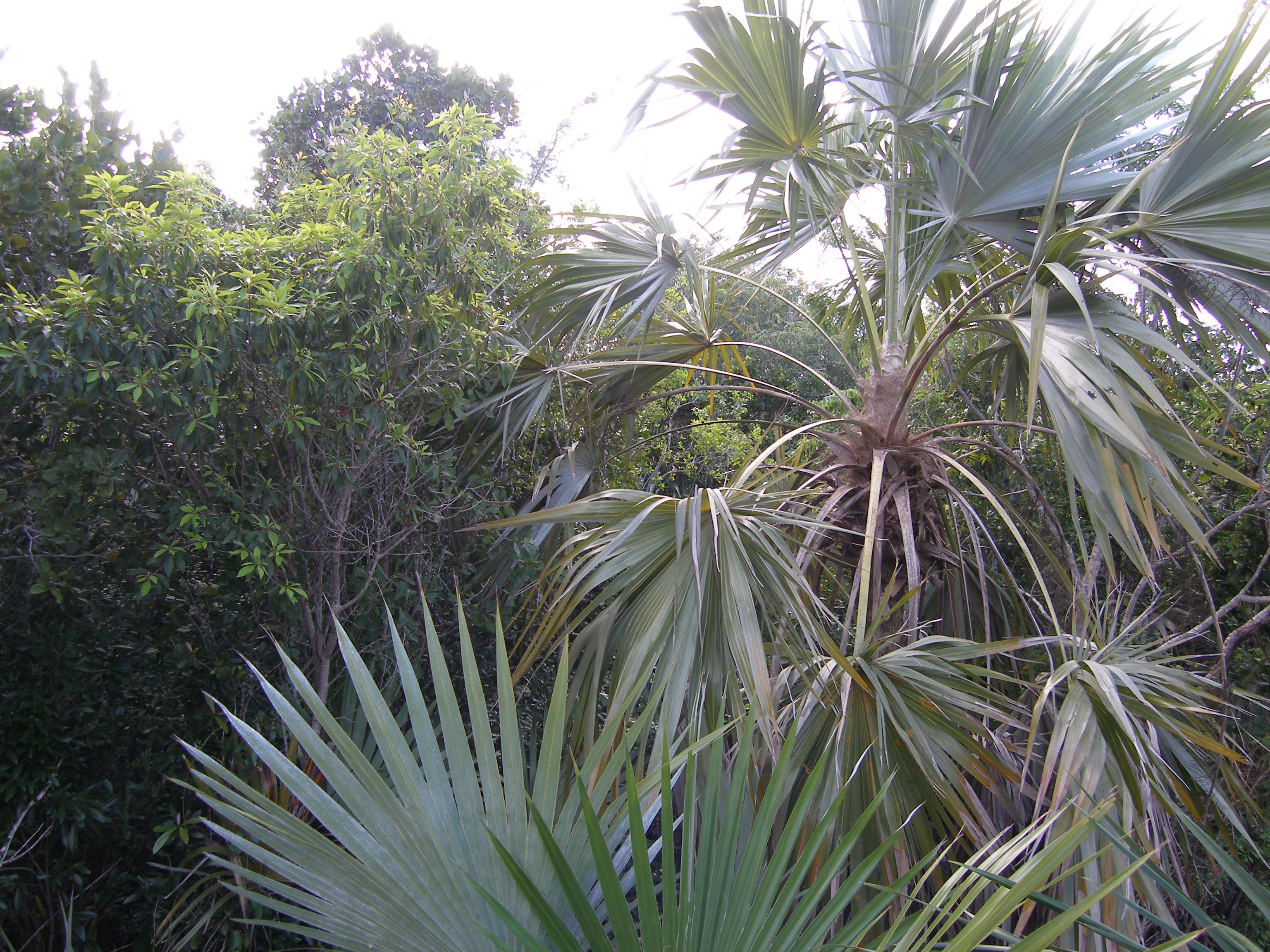 Additional photo for property listing at Palmetto Shores Drive Palmetto Point, Eleuthera Bahamas