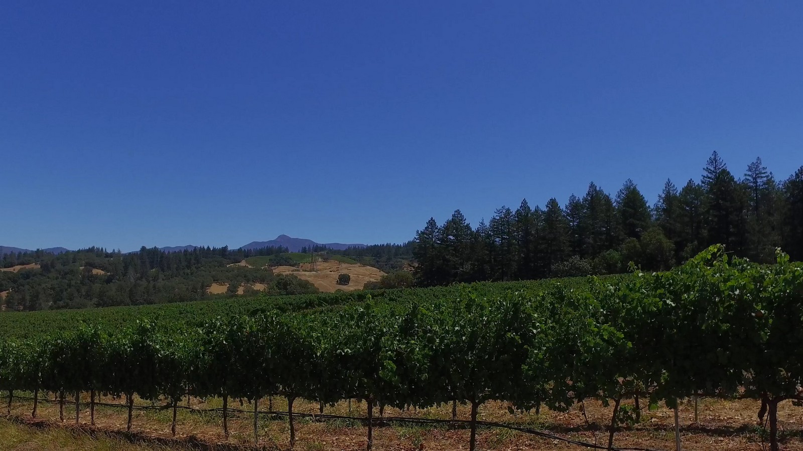 sales property at Healdsburg Estate Home Site