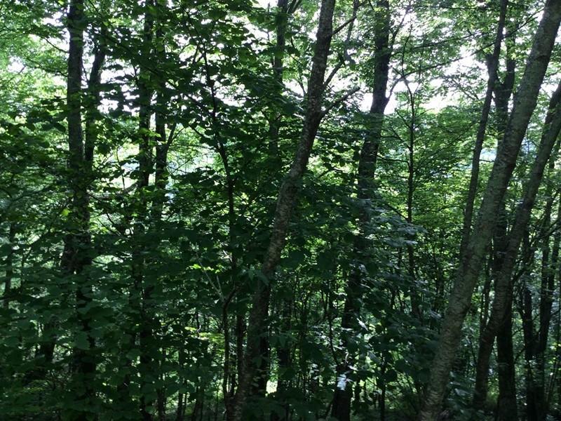 土地 为 销售 在 TBD Moorewood Circle Highlands, 北卡罗来纳州, 28741 美国