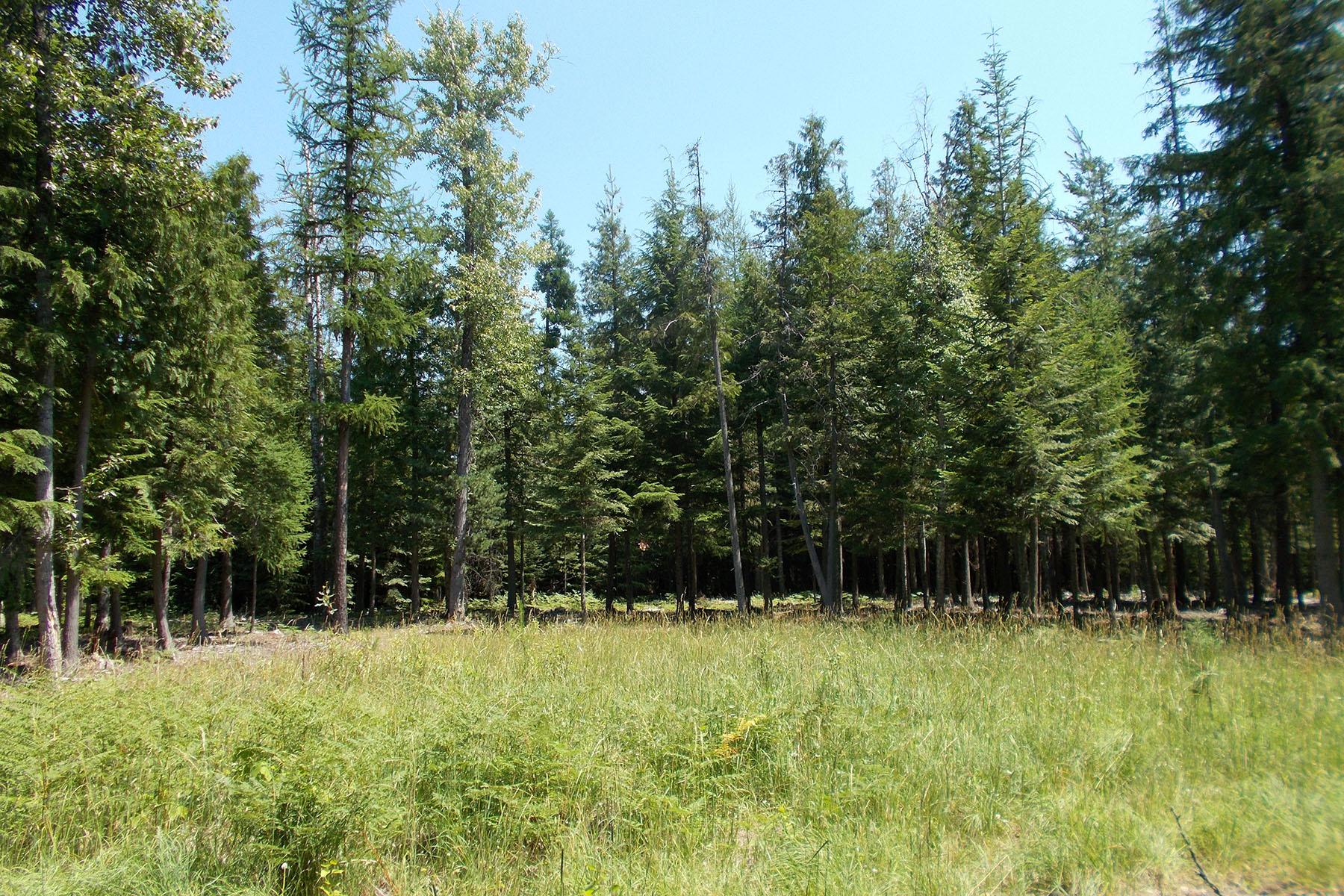 Terreno por un Venta en Timbered property wpaid water hook-up Lot 2 Morris Road Naples, Idaho, 83805 Estados Unidos