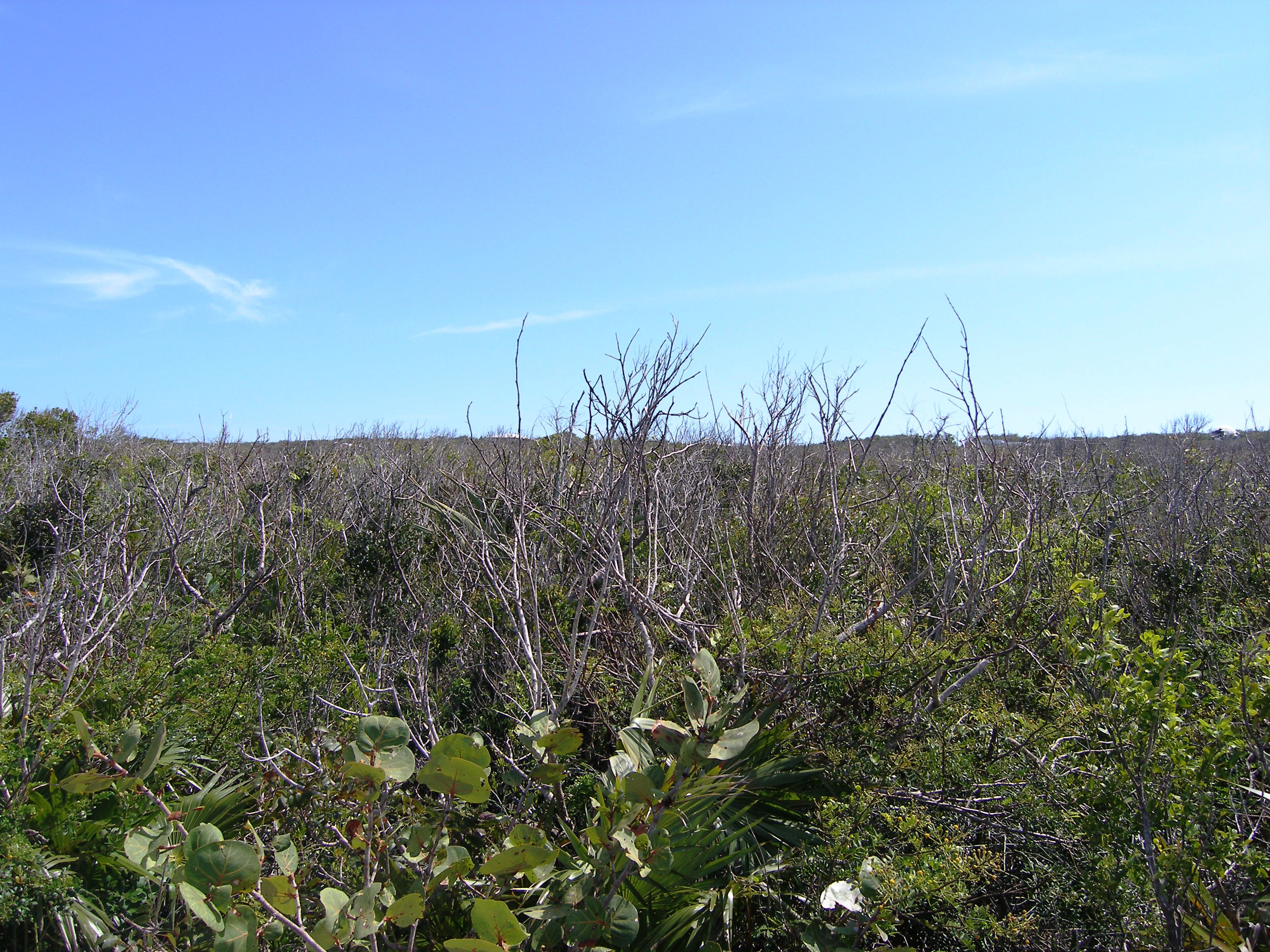 Additional photo for property listing at Hillside Lot Gregory Town, Eleuthera Bahamas