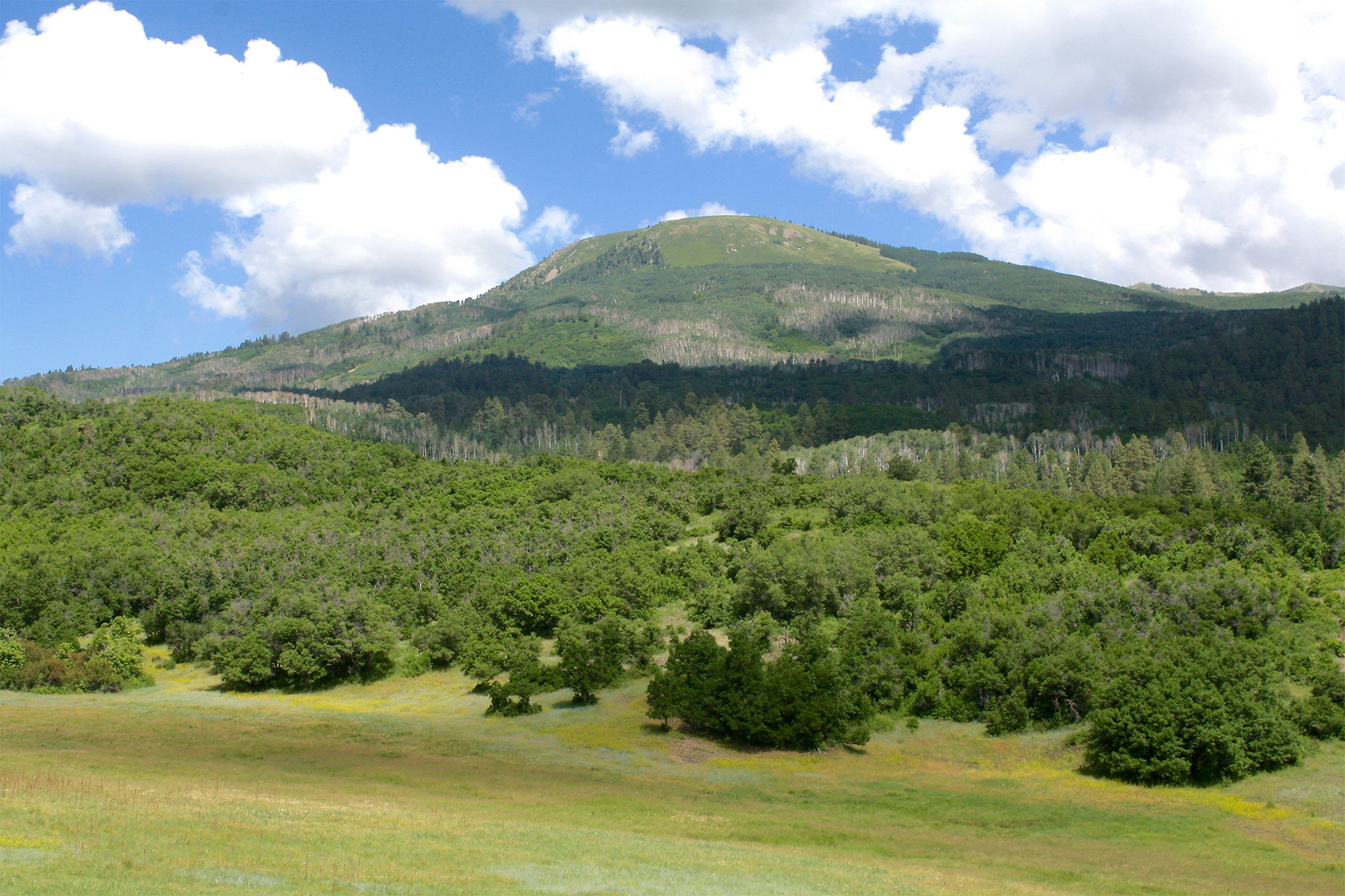 Land for Sale at Destination Ranch TBD Jobe Canyon Durango, Colorado, 81301 United States