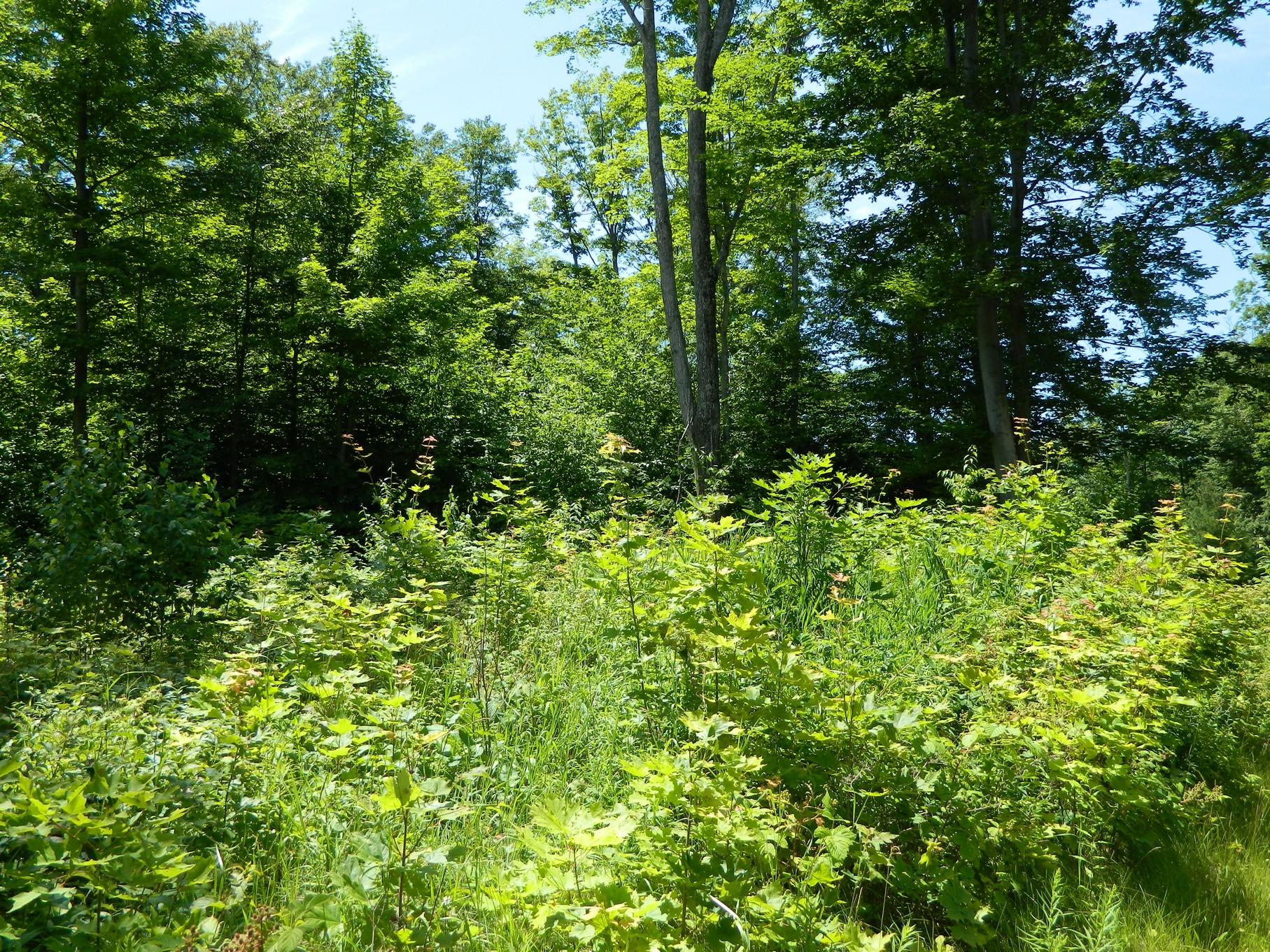 Terreno para Venda às Broken Ridge Lot 10 8167 East Ridge Harbor Springs, Michigan, 49740 Estados Unidos