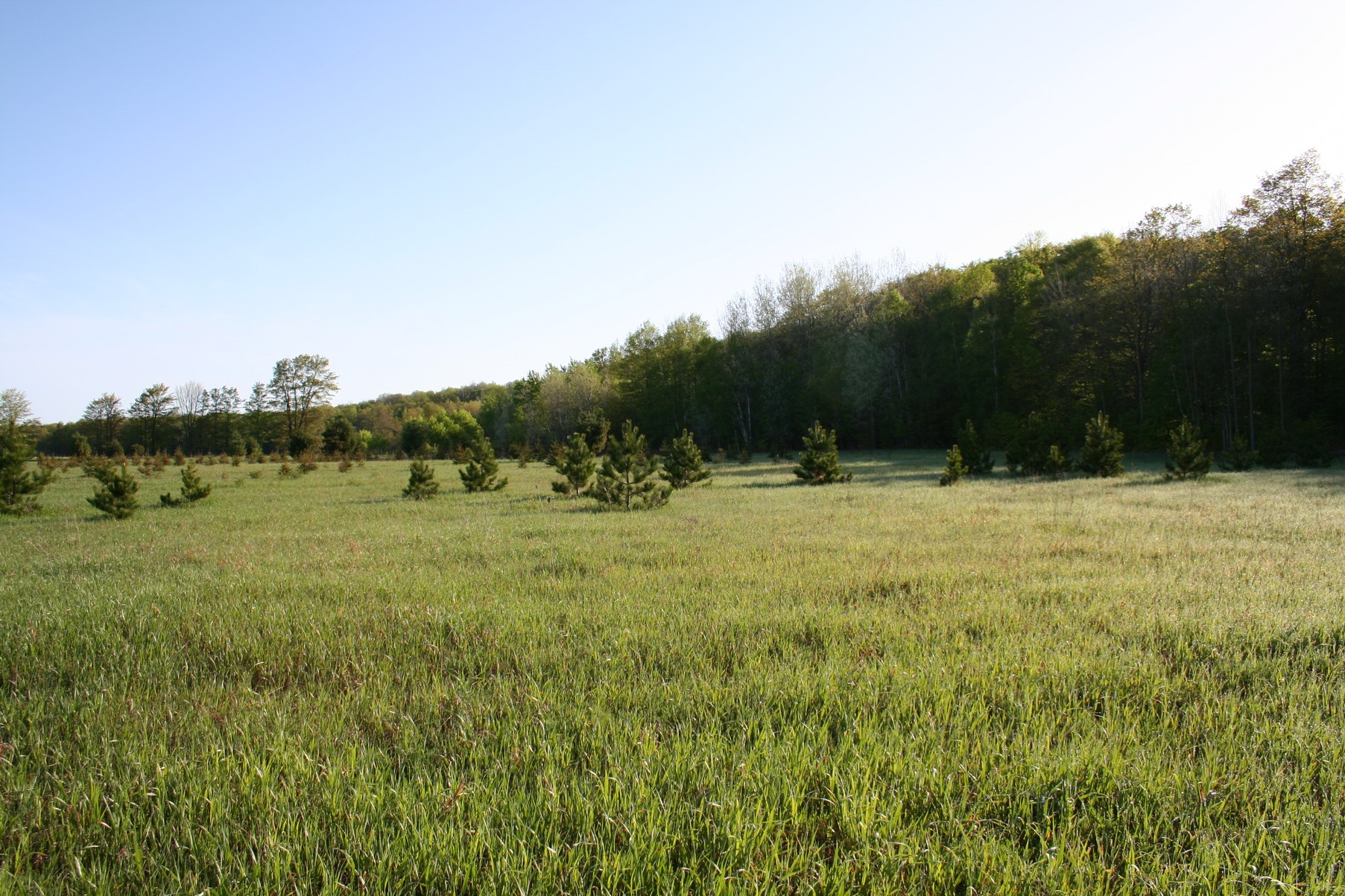 Land for Sale at Bliss - 75 acres Canby Road Levering, Michigan, 49755 United States