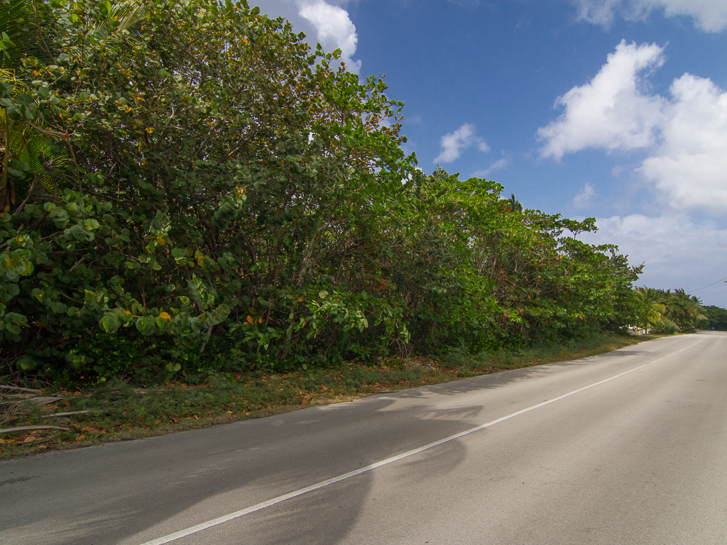 Additional photo for property listing at Beach front land - Old Man Bay 旧曼湾, 大开曼岛 开曼群岛