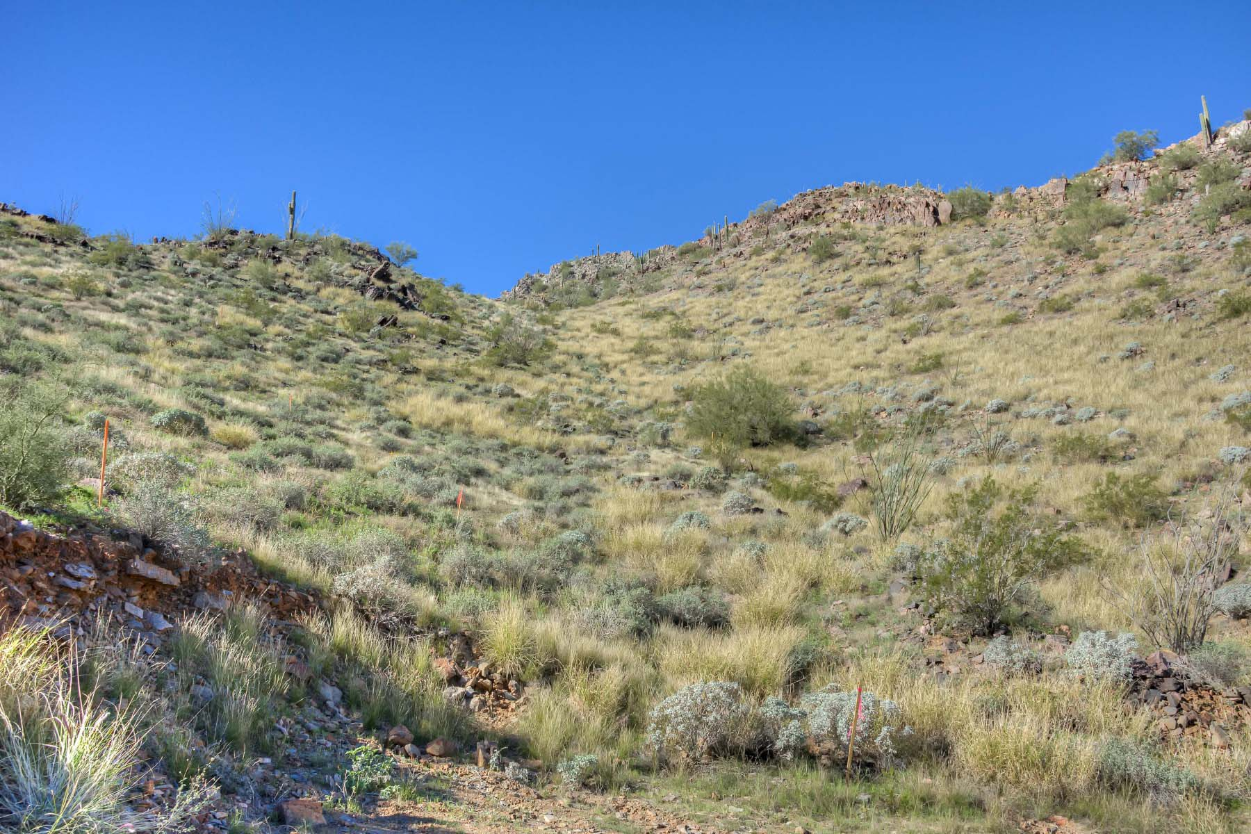 Terreno para Venda às Ruby lot boasts the most exclusive view of Crown Canyon's Saguaro forest. 7150 N 40TH ST 11 Paradise Valley, Arizona 85253 Estados Unidos