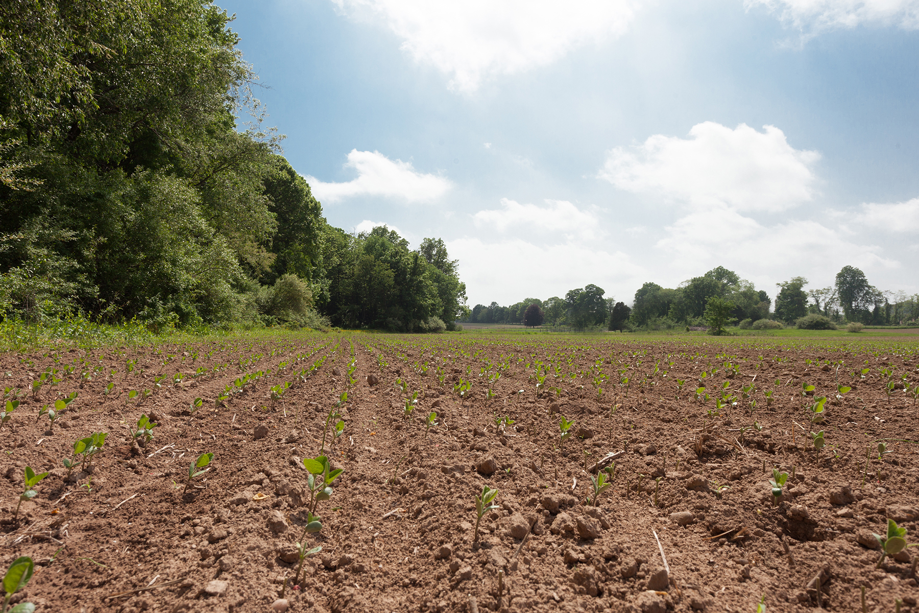Land for Sale at New Hope, PA 3161 Creamery Rd. New Hope, Pennsylvania 18938 United States