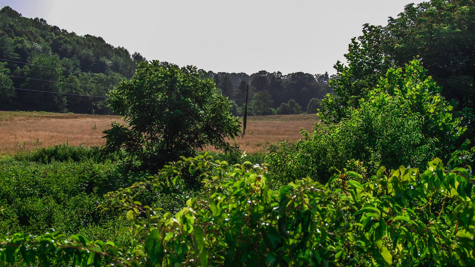 Land for Sale at Ideal Acreage for Commercial or Residential 10 Silverwood Farm Road Weaverville, North Carolina 28787 United States