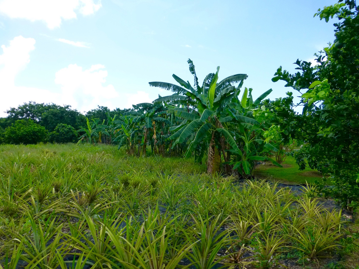 Additional photo for property listing at Great Estate-sized Lots Gregory Town, Eleuthera Bahamas