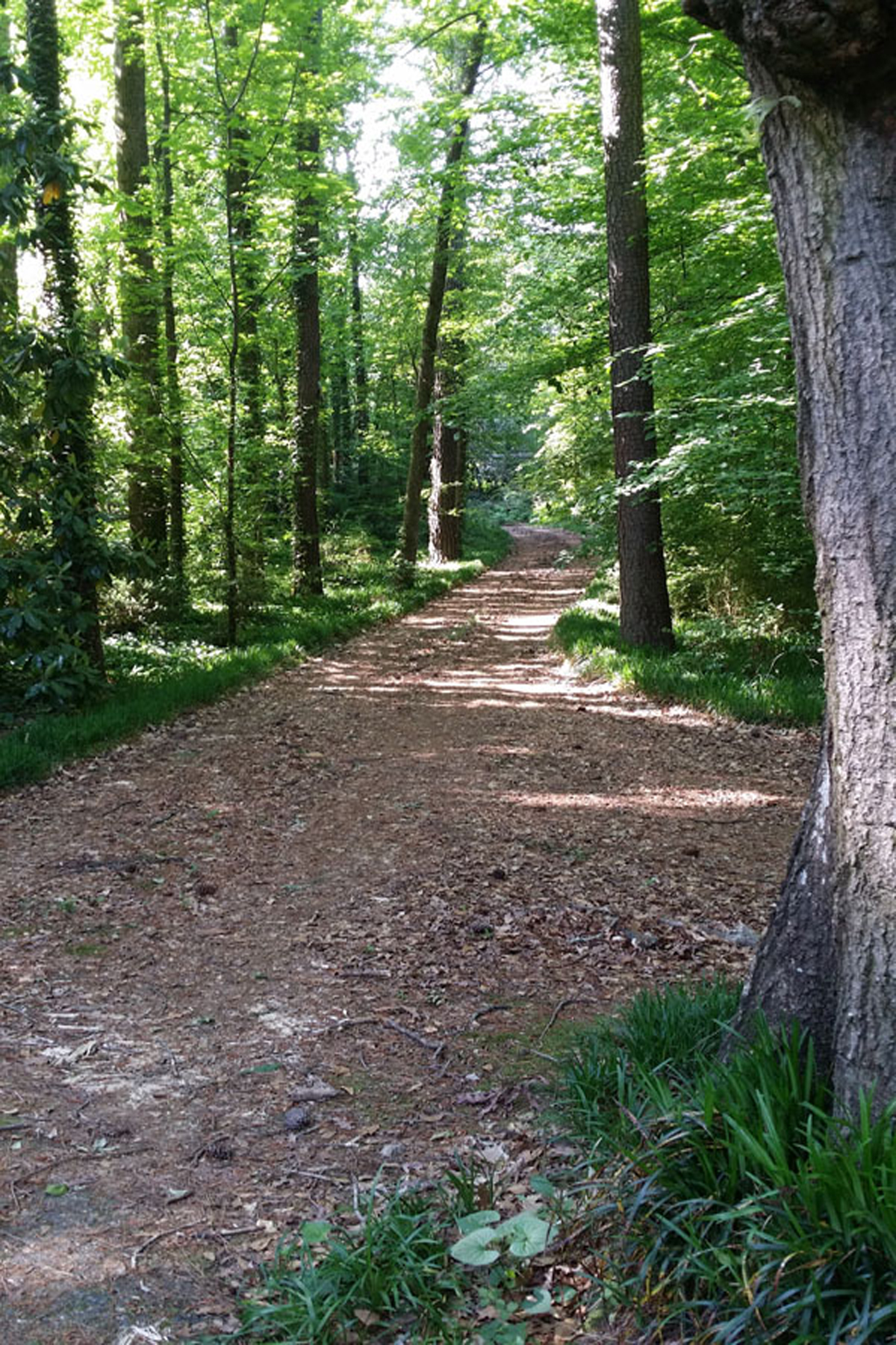 Property For Sale at Buckhead Lot