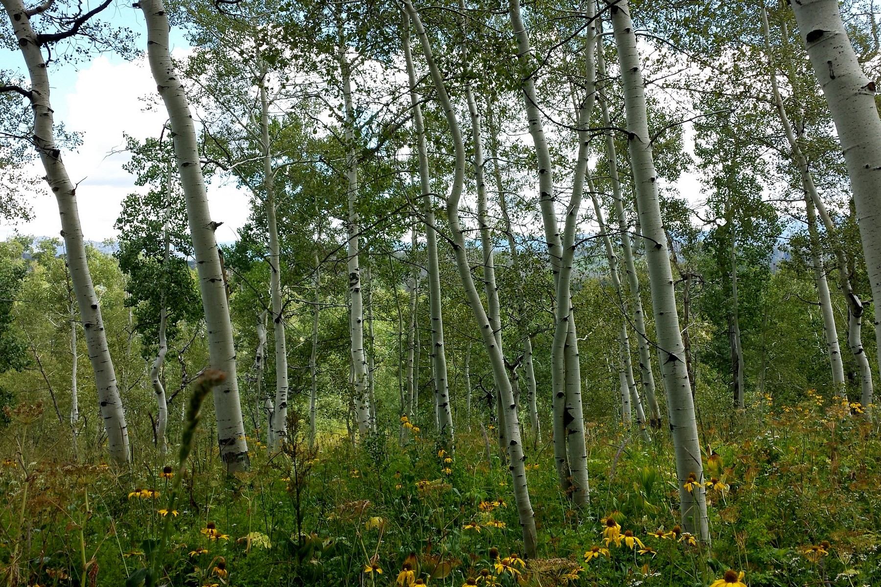Land for Sale at Steamboat Lake Lot 57855 Longfellow Way Clark, Colorado, 80428 United States
