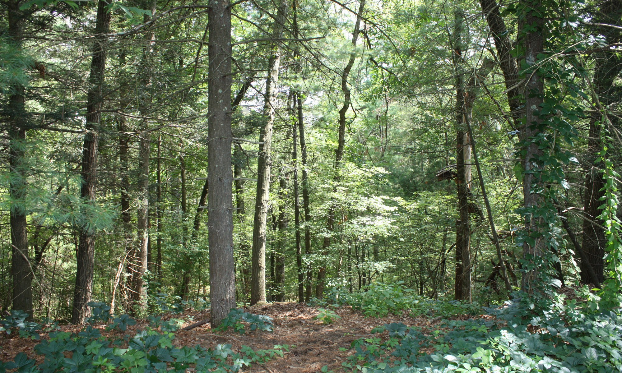 Land for Sale at Buildable Lot Lot 2 Pine Ridge Road Lincoln, Massachusetts 01773 United States