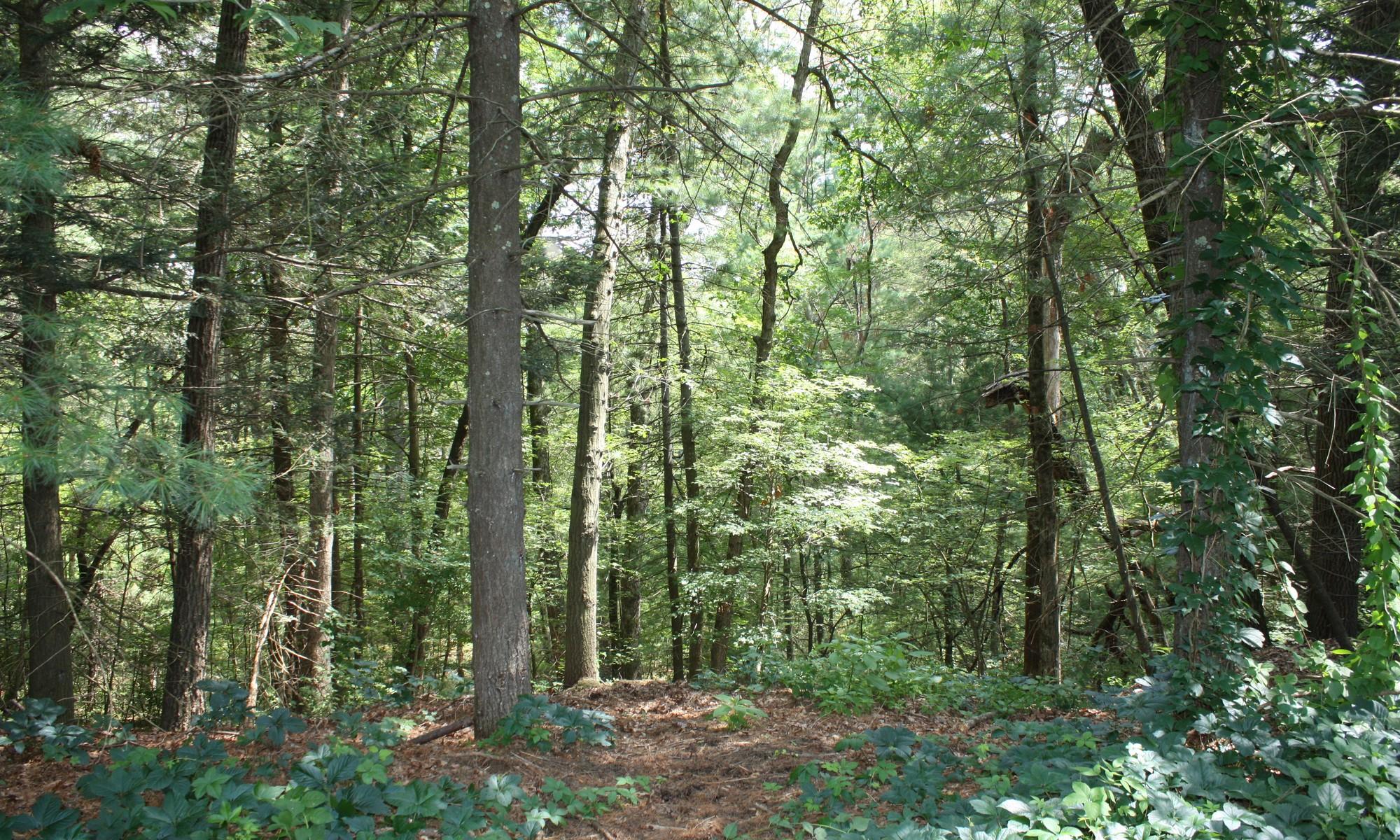 Terreno para Venda às Buildable Lot Lot 2 Pine Ridge Road Lincoln, Massachusetts 01773 Estados Unidos