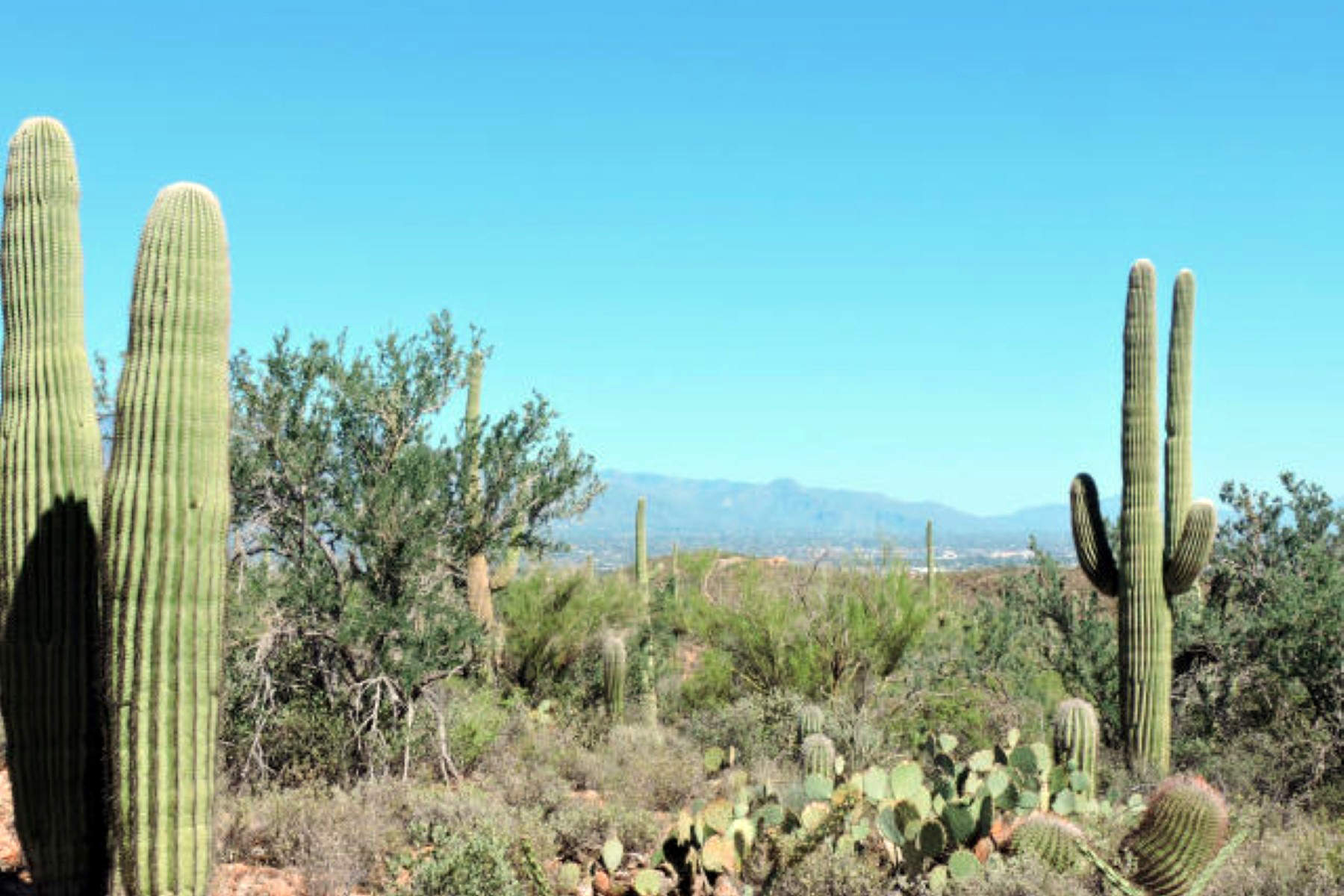 Terreno por un Venta en Amazing Homesite With Breathtaking Panoramic Views 3970 N Avenida Dos Vistas Tucson, Arizona 85745 Estados Unidos