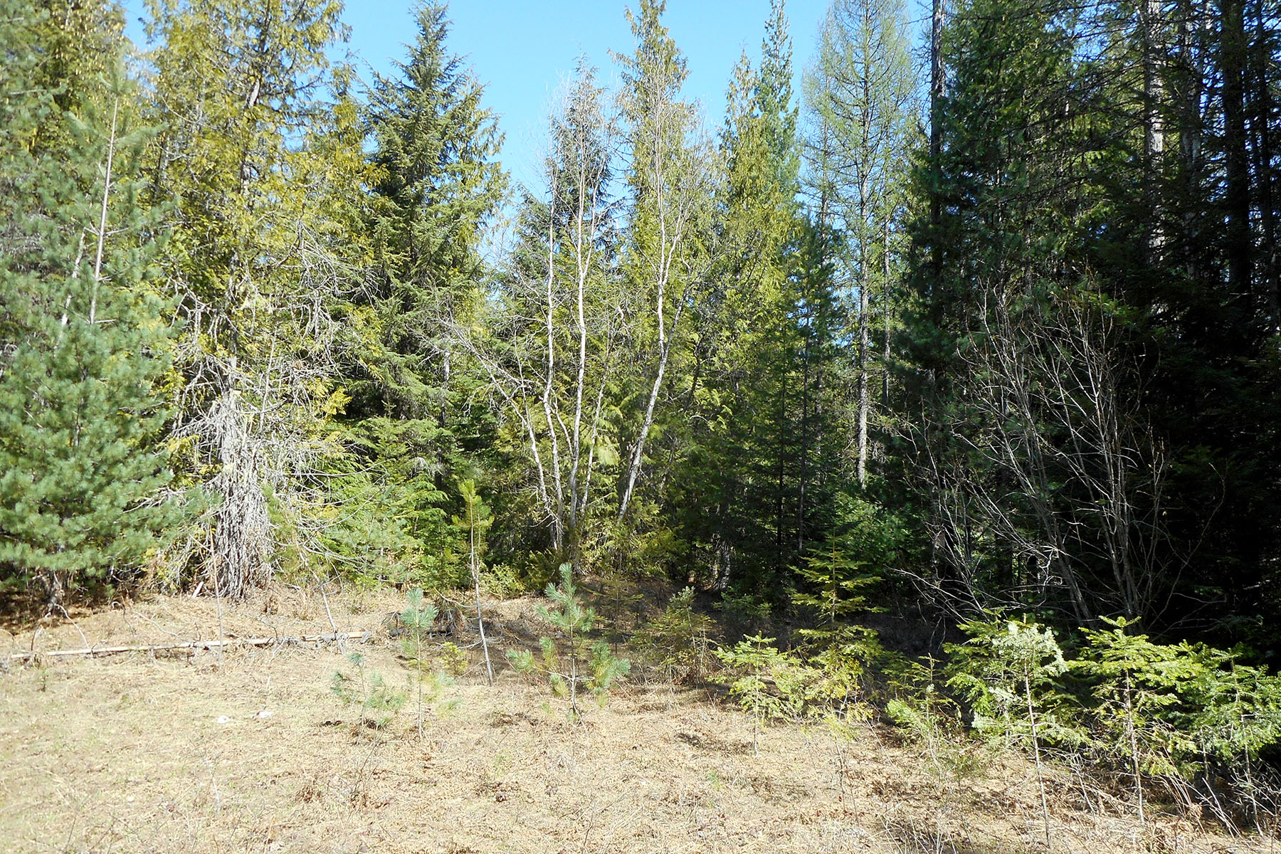 Property Of Private wooded 5 acre parcel