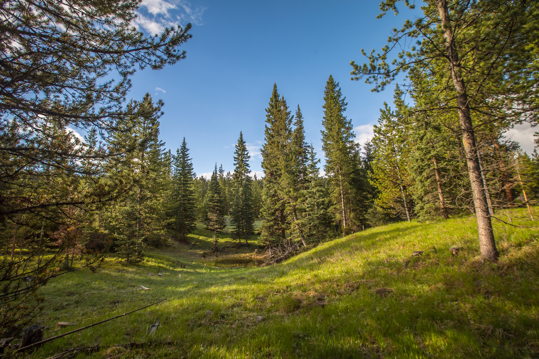 Property Of Private Towering Pines Acreage