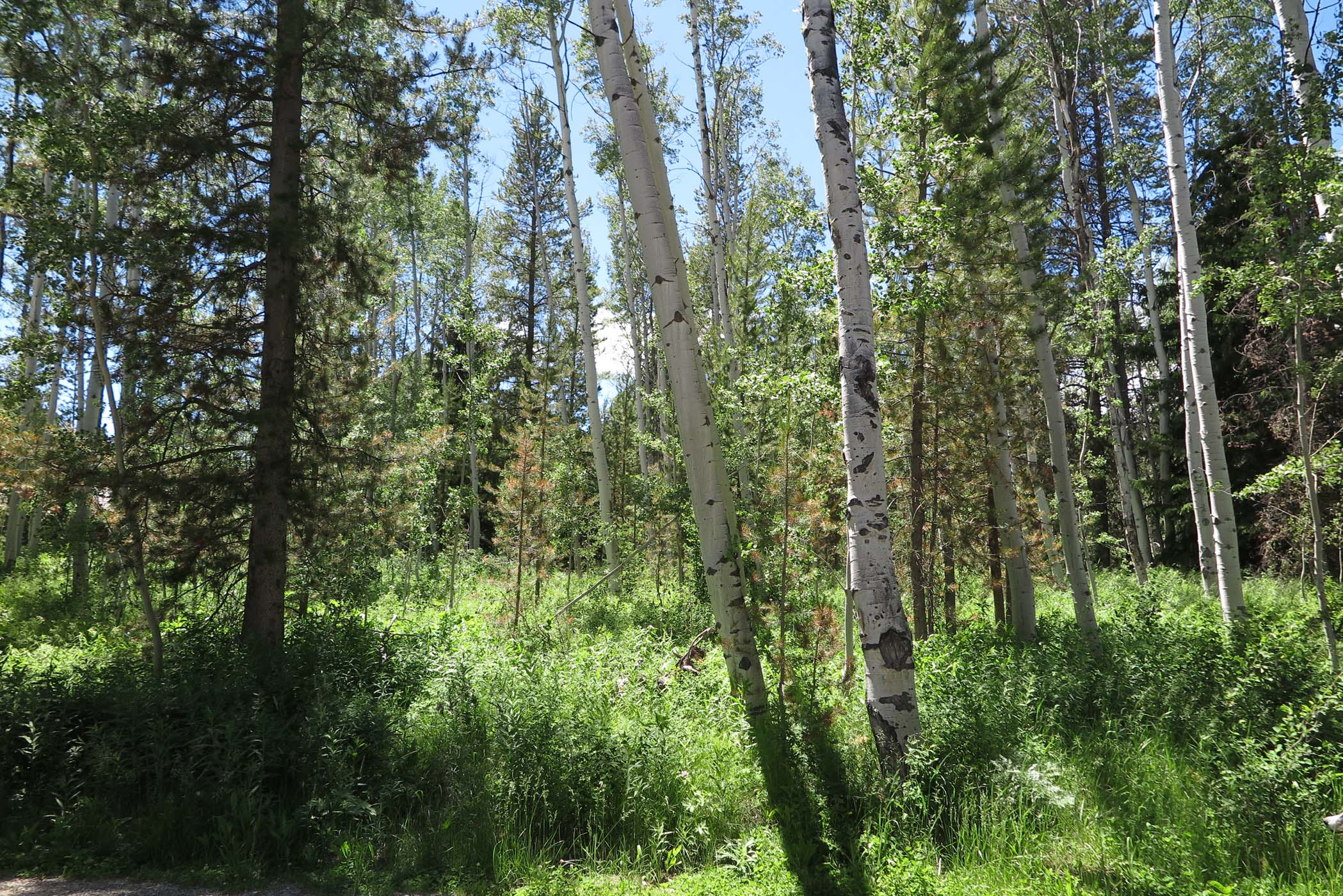 sales property at Bordering National Forest