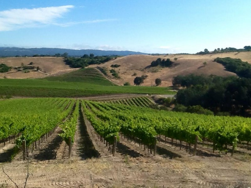 sales property at Supreme Paso Robles Vineyard
