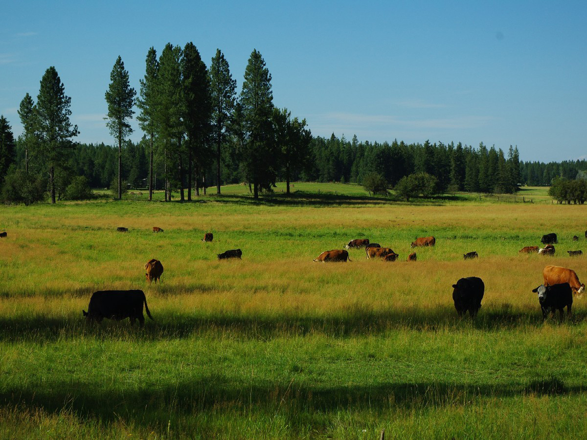 Farm / Ranch / Plantation for Sale at Rare 121 Acre Estate 3222 S. Sagle Rd Sagle, Idaho 83860 United States