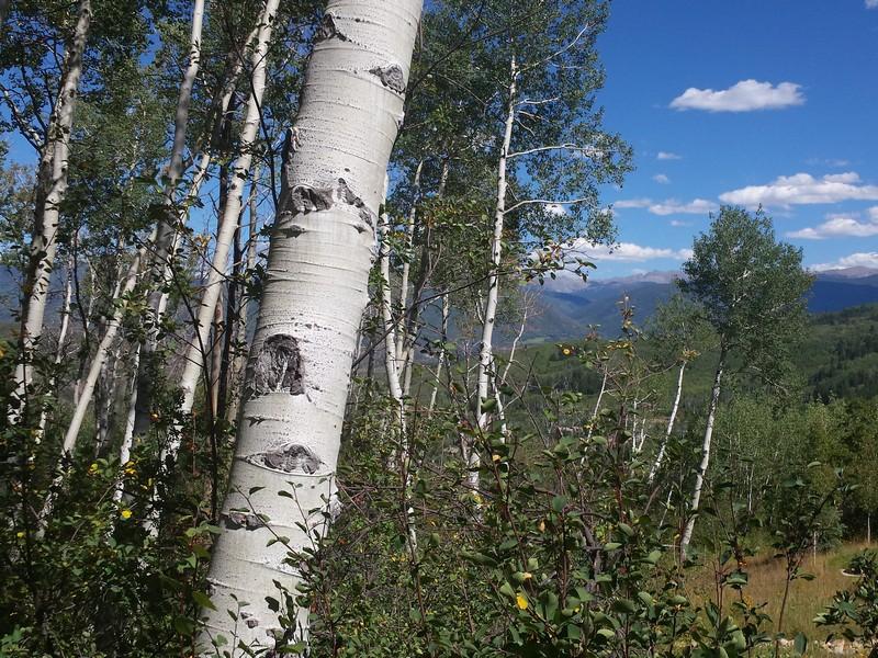 Đất đai vì Bán tại Ridge Run III Lot 60 12 East Ridge Road Snowmass Village, Colorado 81615 Hoa Kỳ