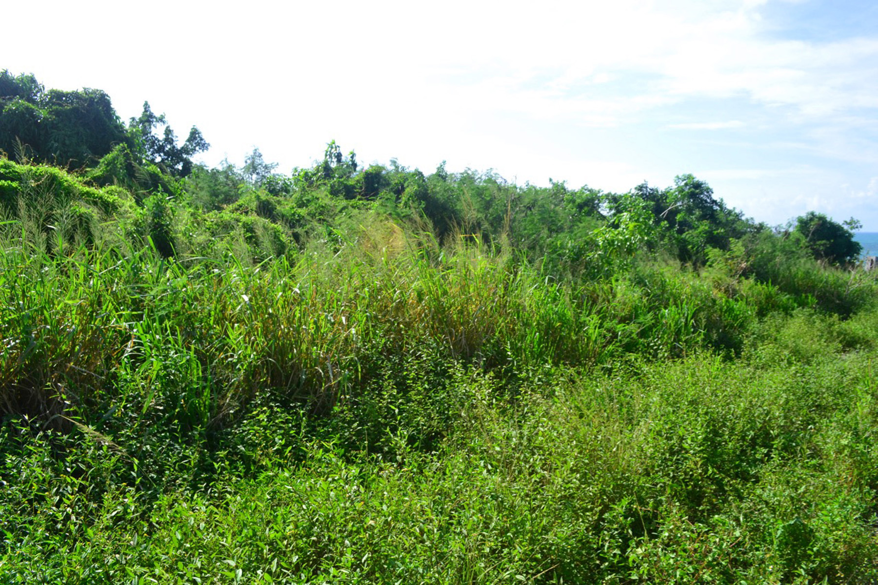 Additional photo for property listing at Russell Island South Vacant Lots 西班牙维尔斯, 伊路瑟拉 巴哈马