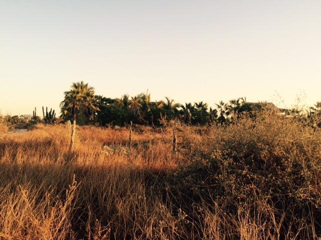 Additional photo for property listing at San Pedrito Paradise La Paz, Baja California Sur Mexico