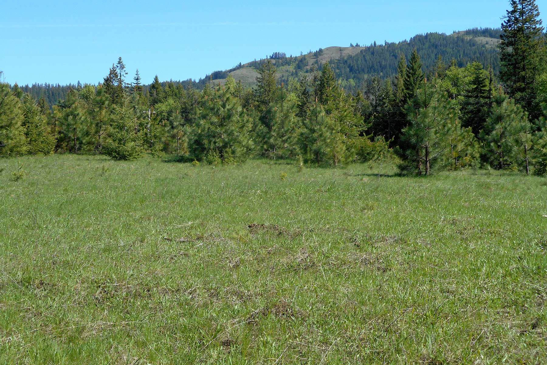 Land for Sale at Great 5 acre equestrian property NNA Lot 6 Sagle Road Sagle, Idaho, 83860 United States