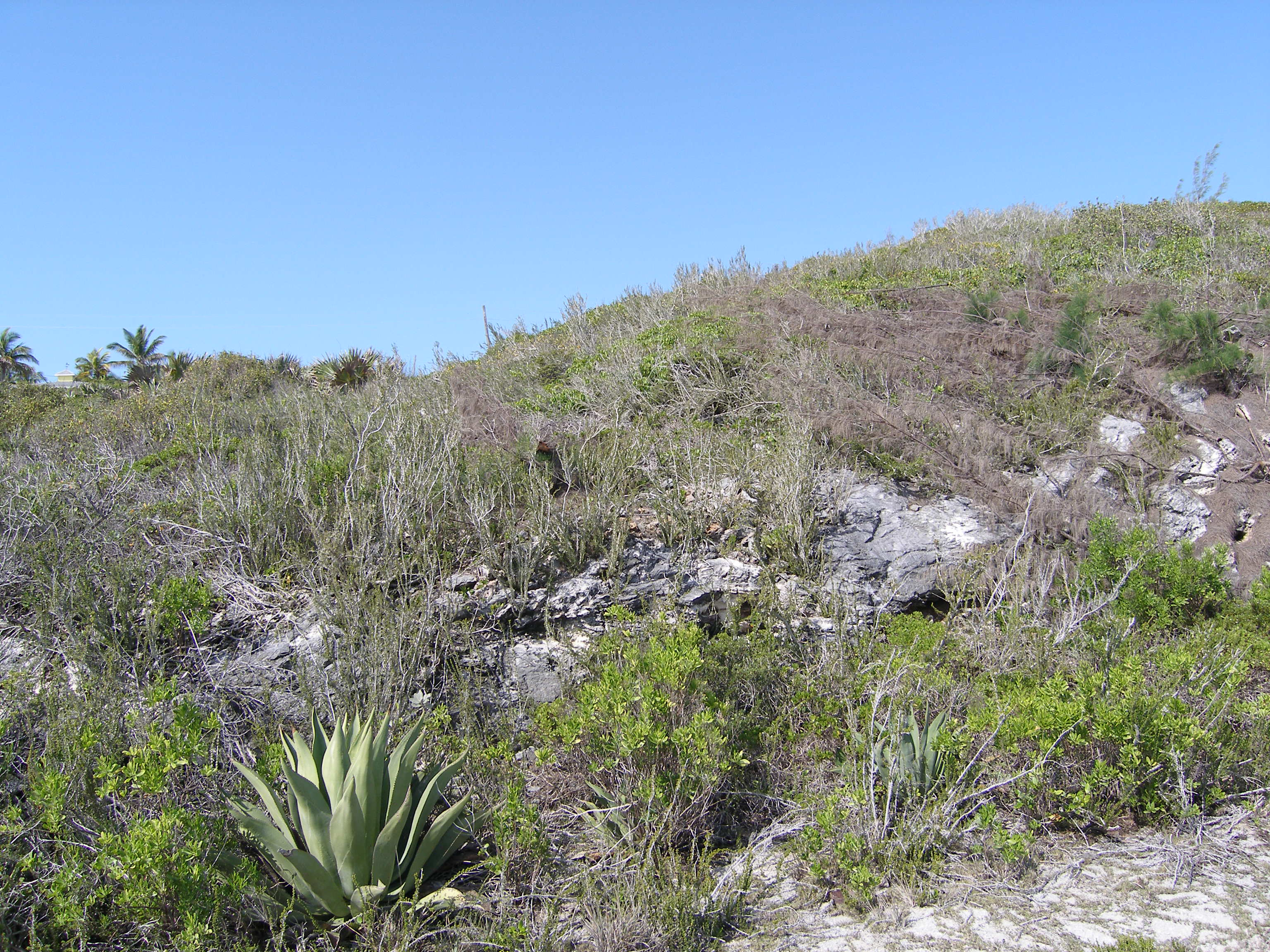 Additional photo for property listing at Lot 7, Block 6, Section A Rainbow Bay, Eleuthera Bahamas