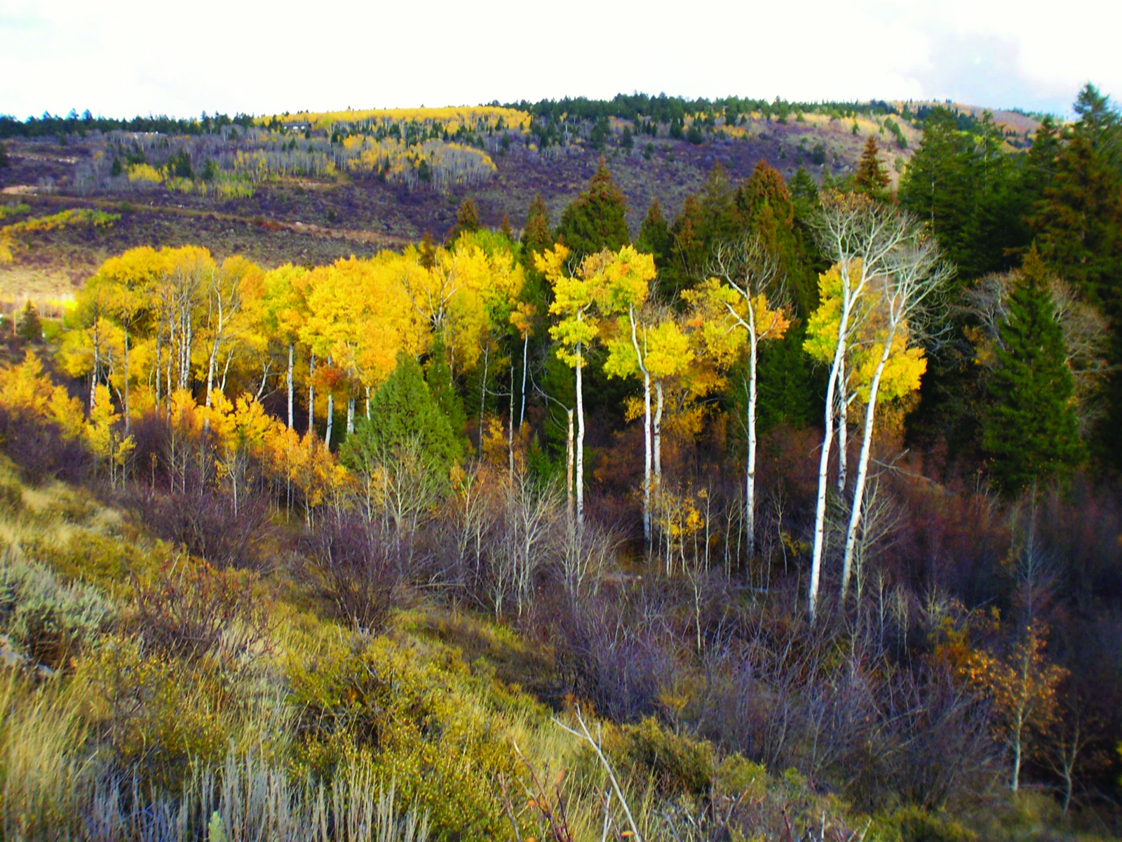 sales property at 2.5 + Acre Sites - Fox Creek Canyon