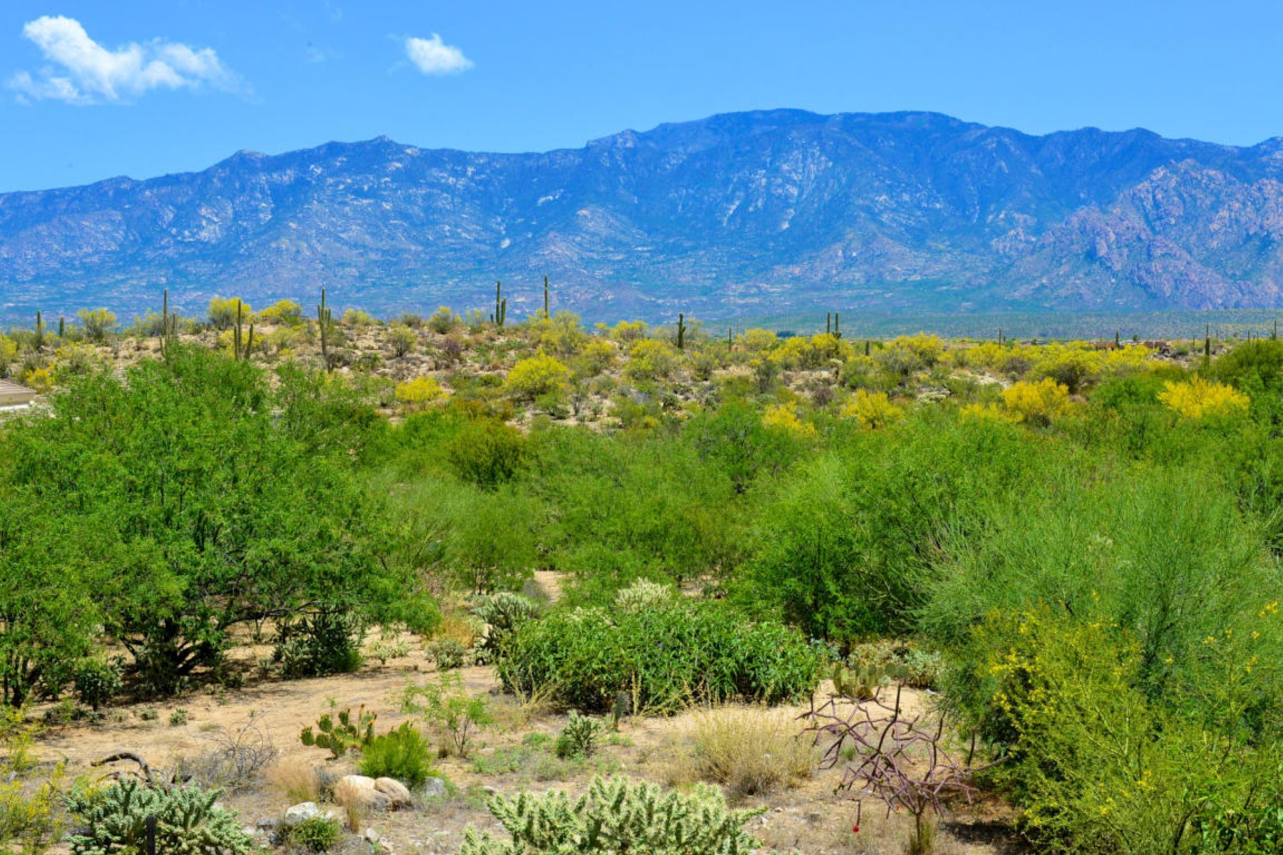 Property For Sale at Private and serene homesite with saguaro and marvelous rock outcroppings.