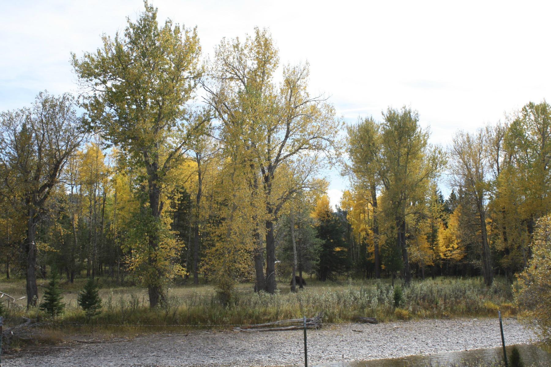 土地 为 销售 在 4727 MT Hwy 200 林肯, 蒙大拿州, 59639 美国