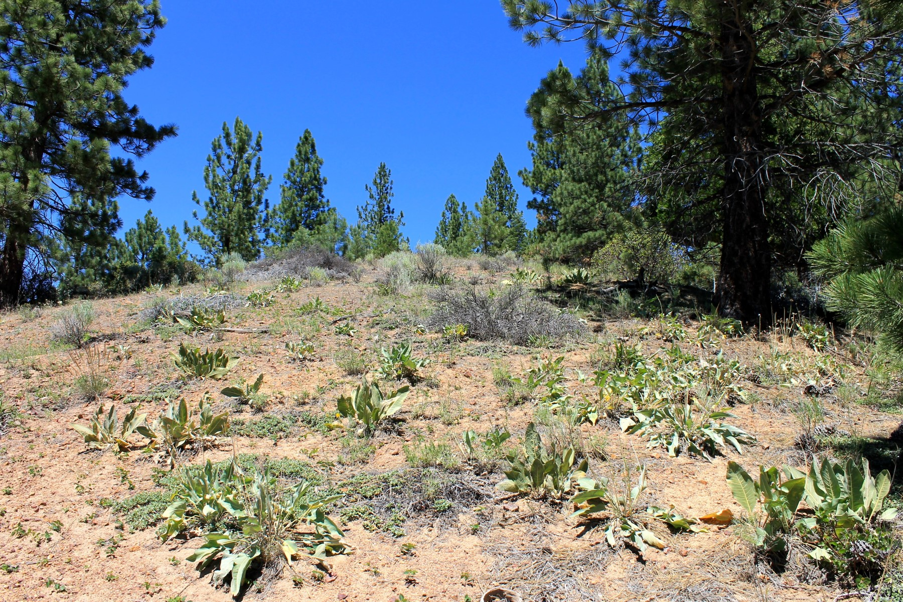 Additional photo for property listing at 212 Cedar Ravine Road  Portola, California 96122 United States