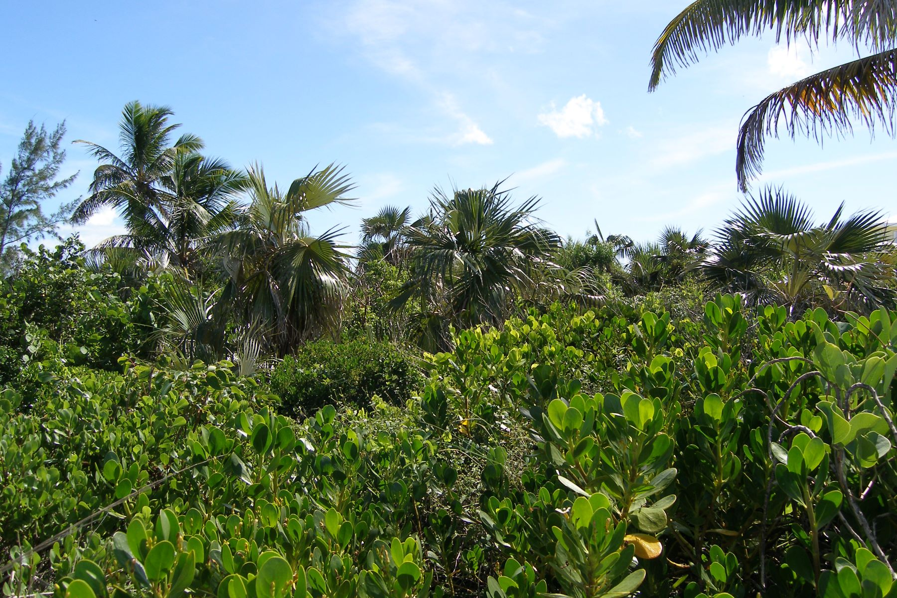 Additional photo for property listing at Nature Lover's Paradise North Palmetto Point, 帕尔梅托, 伊路瑟拉 巴哈马