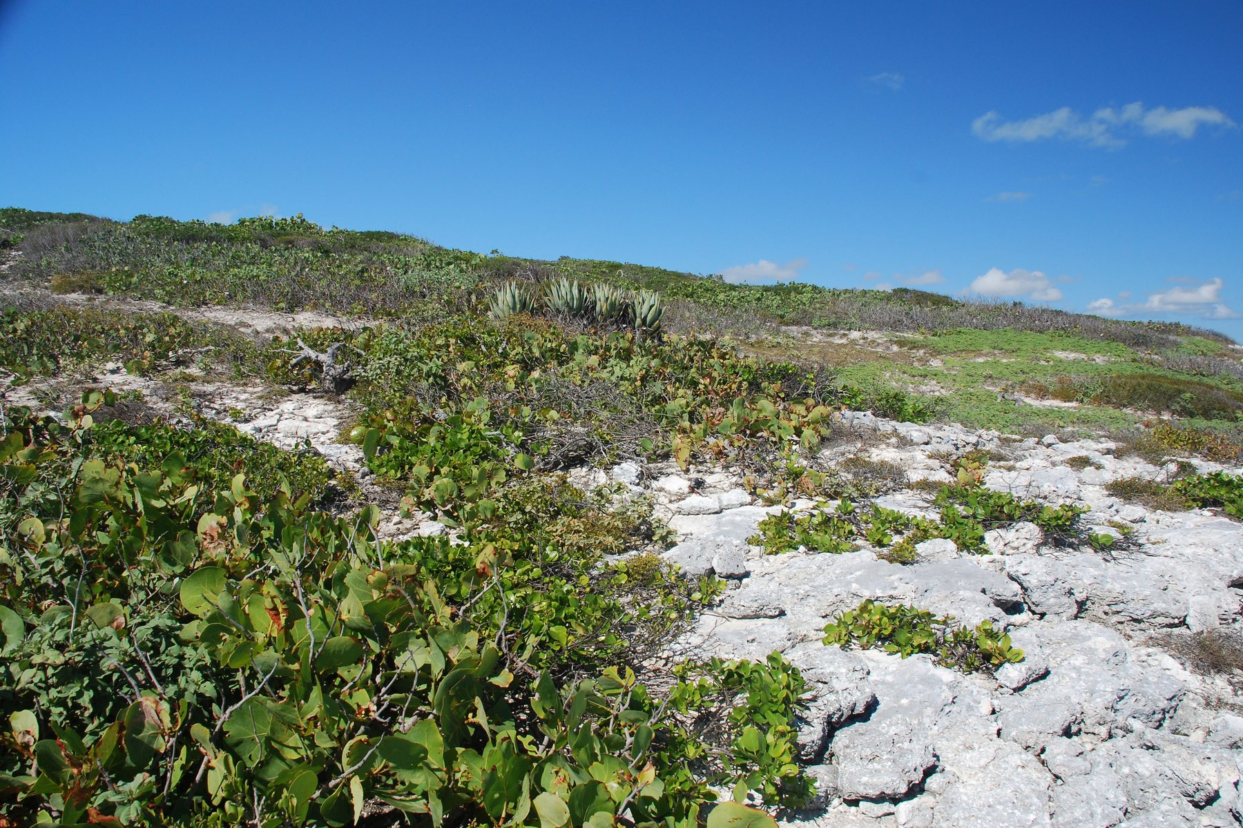 Additional photo for property listing at Oceanfront Lot 2017 Sailrock, South Caicos Îles Turques Et Caïques