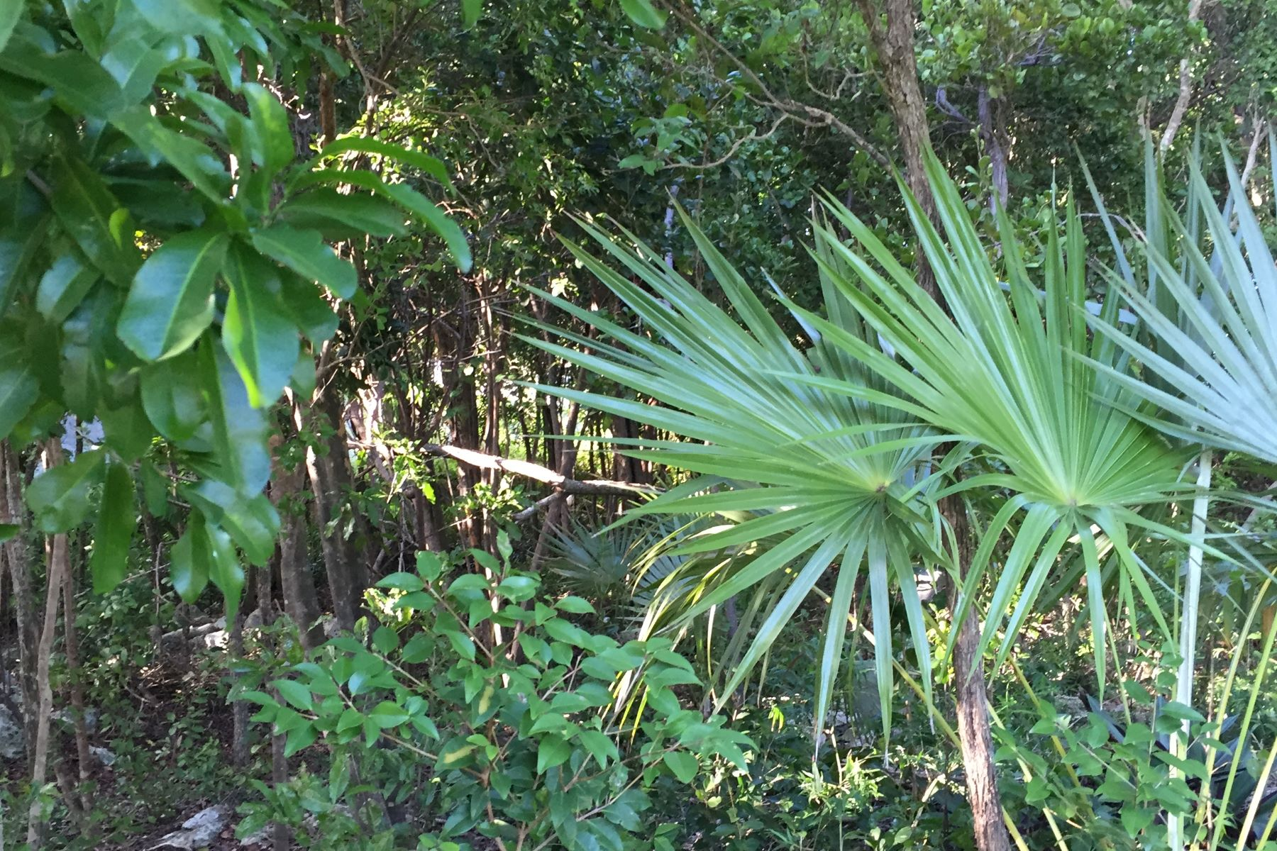 Additional photo for property listing at Tropical Gardens Elevated Lot West Bay Street, Nassau And Paradise Island Bahamas