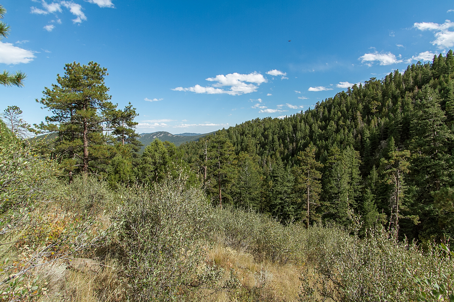 Additional photo for property listing at 123 Fox Ridge Drive 123 Fox Ridge Drive Evergreen, Colorado 80439 United States