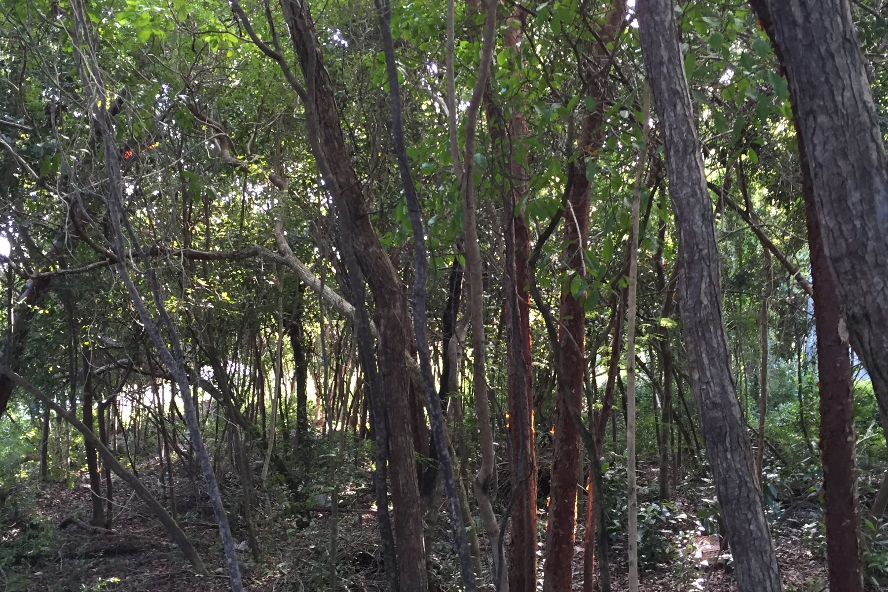 Additional photo for property listing at Tropical Gardens Elevated Lot Other Bahamas, Other Areas In The Bahamas Bahamas