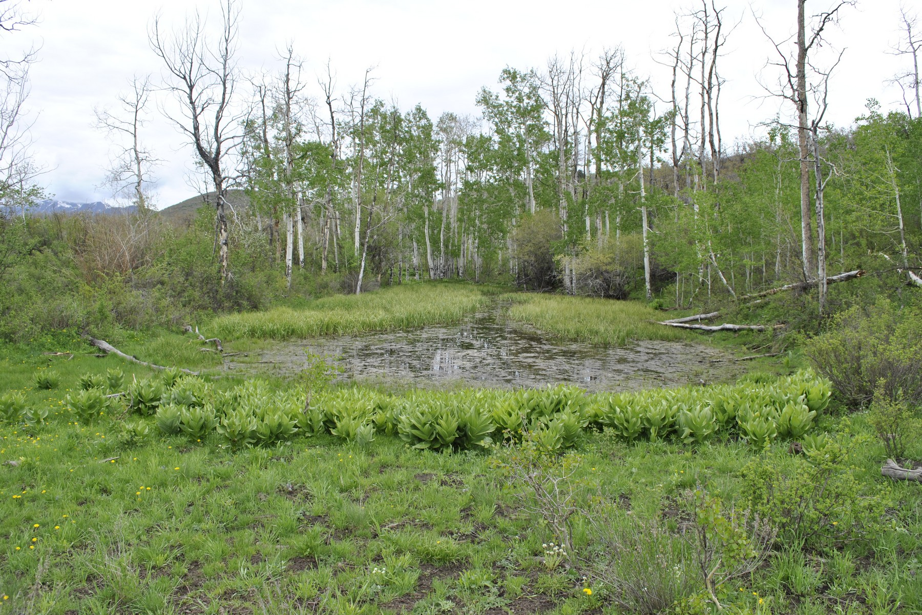 Additional photo for property listing at Clear Fork Ranch 1633 Clear Fork Road Crawford, Colorado 81415 United States
