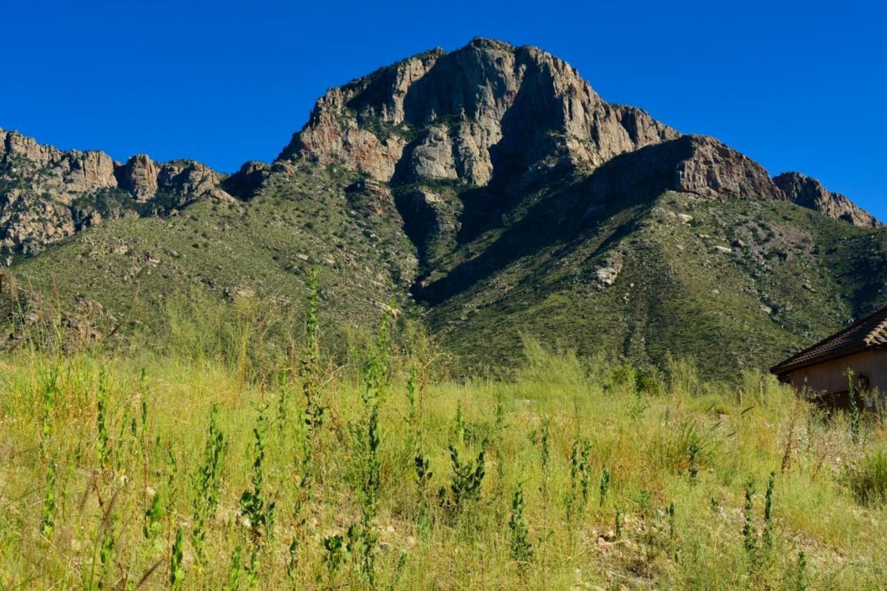 Land for Sale at Reasonably Priced Flat Lot In Ponticello 2521 E Della Roccia Court Oro Valley, Arizona, 85737 United States