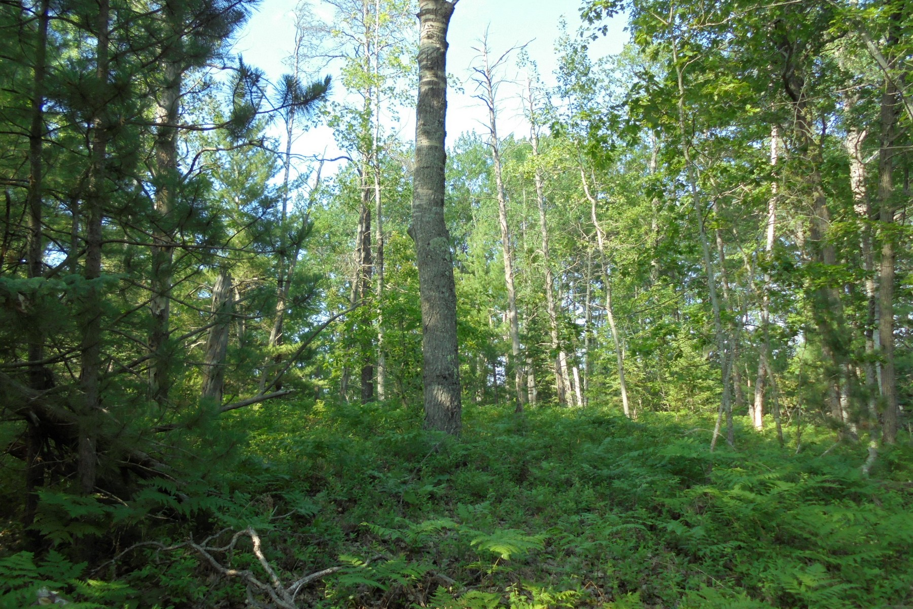 Additional photo for property listing at N. Silver Creek Road  Millersburg, Michigan 49759 United States