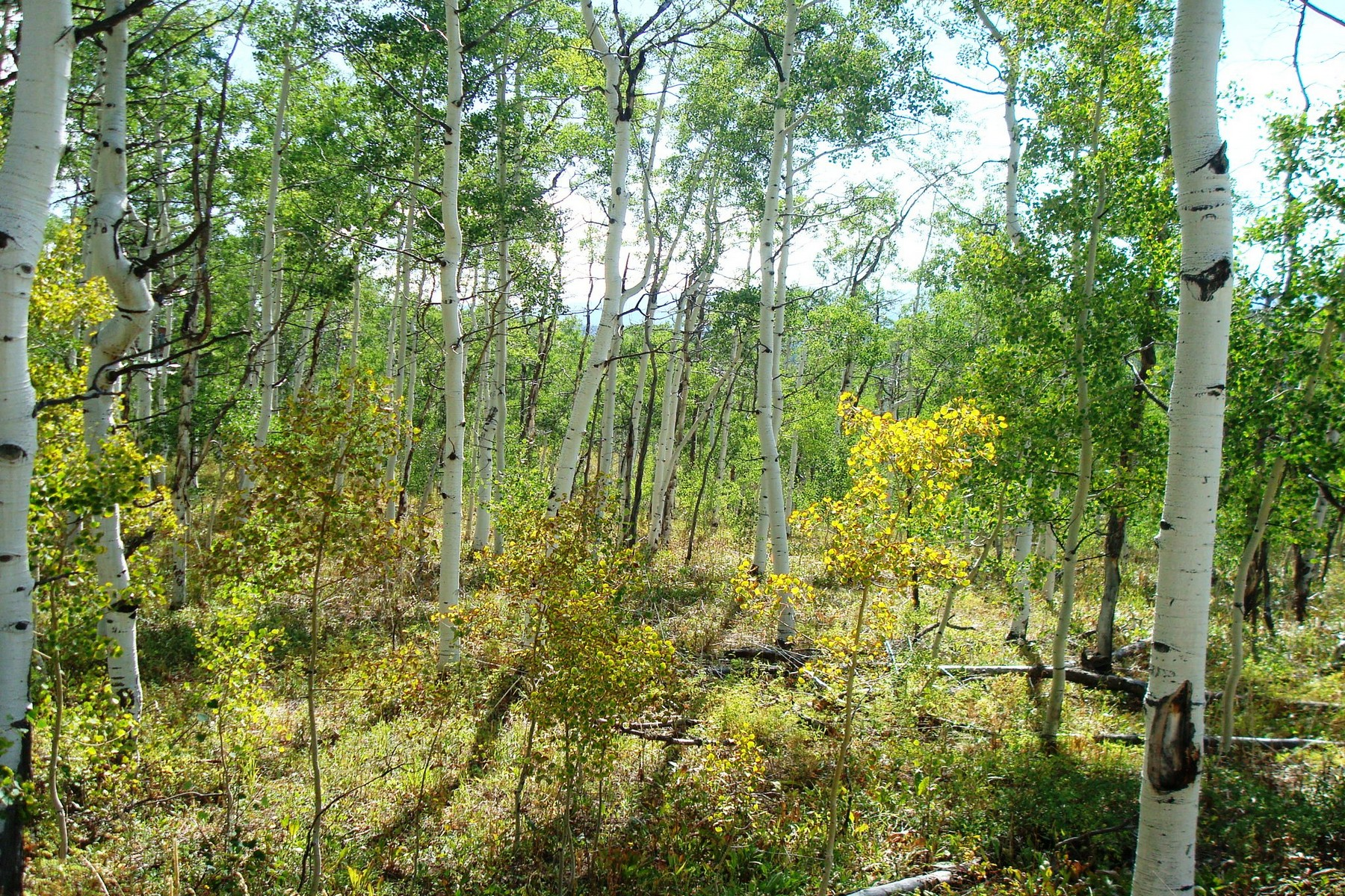 Terrain pour l Vente à Willow Creek Pass Village 57900 Longfellow Way Clark, Colorado, 80428 États-Unis