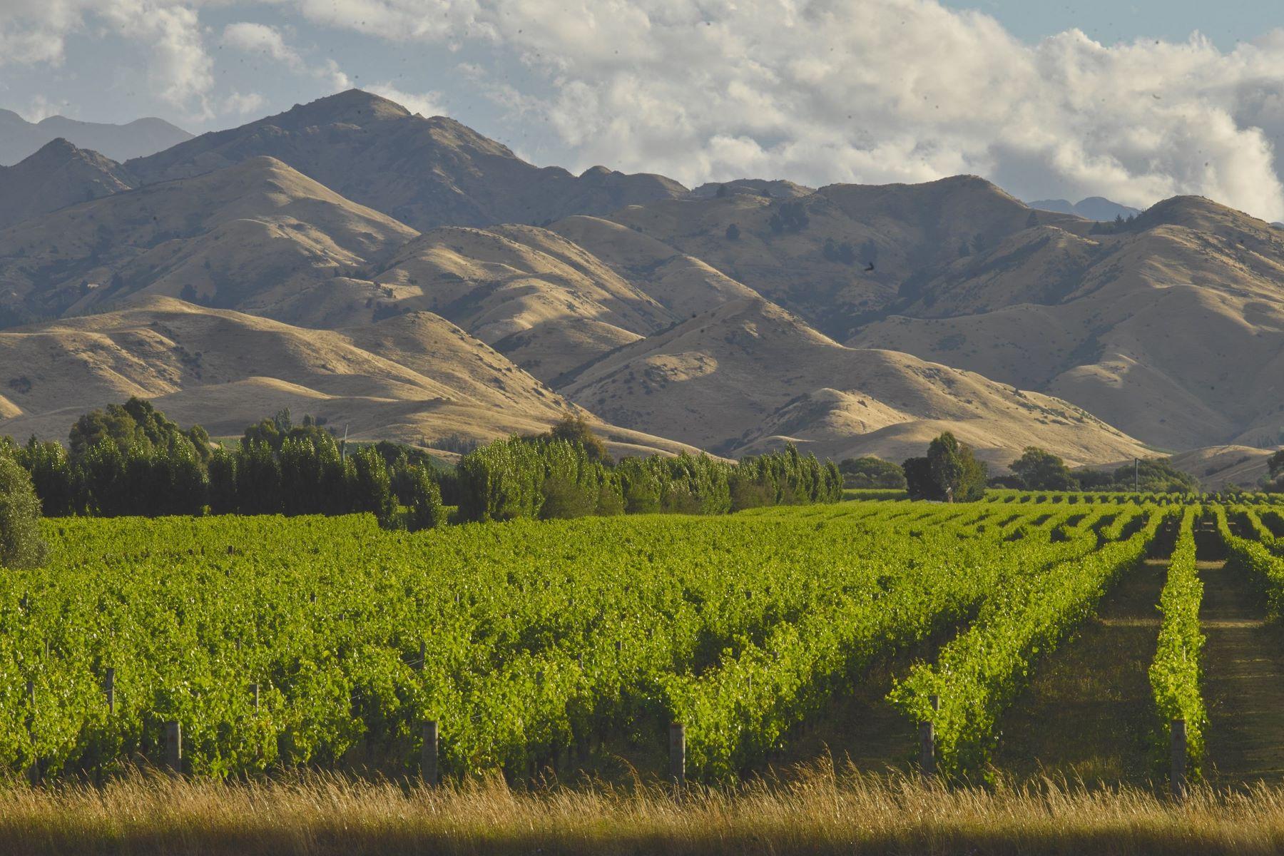 土地 為 出售 在 413 Hawkesbury Road Blenheim, 瑪律伯勒, 7272 新西蘭