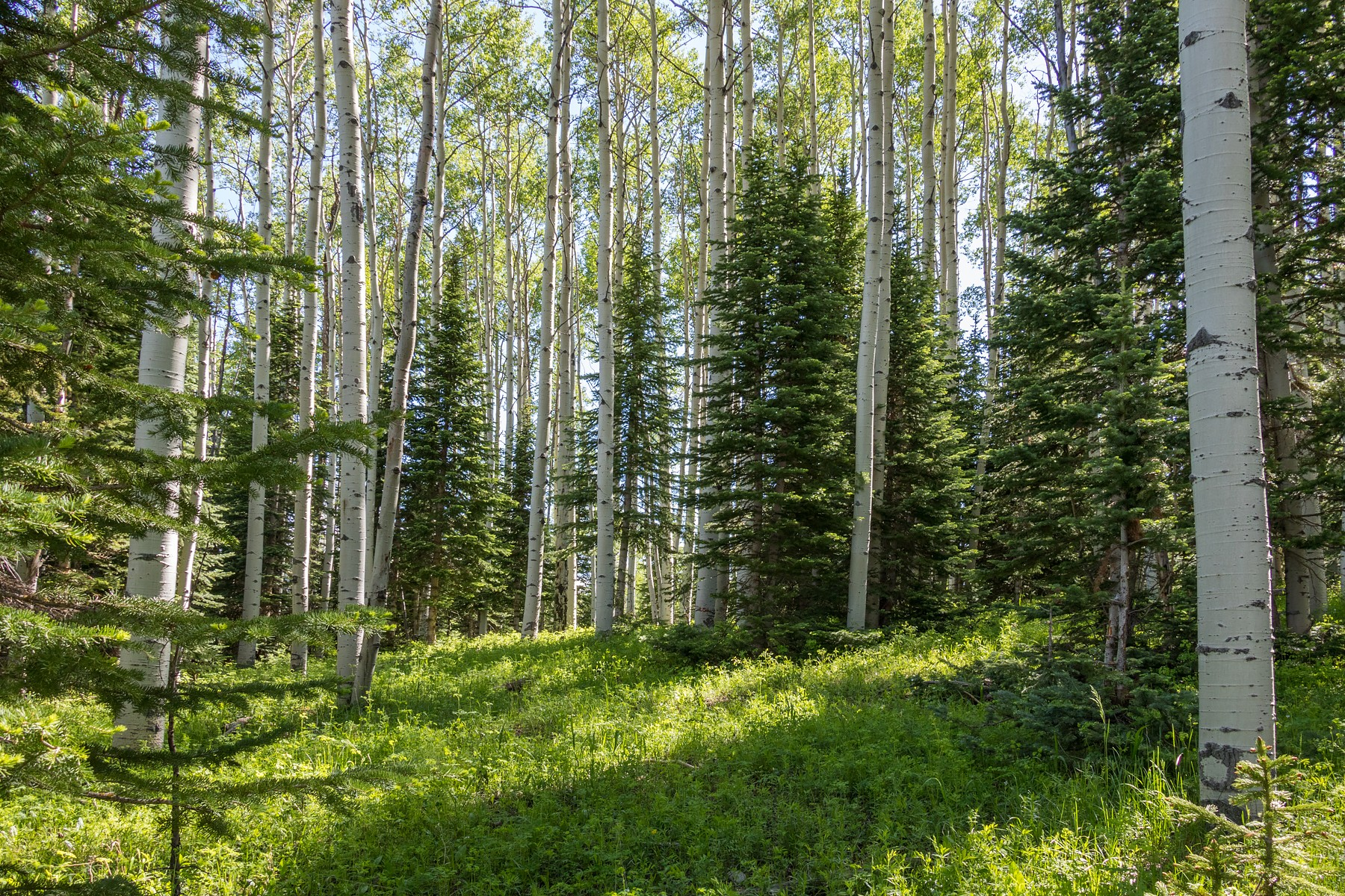 Land for Sale at Lot 430 - Touchdown Drive Telluride, Colorado, 81435 United States