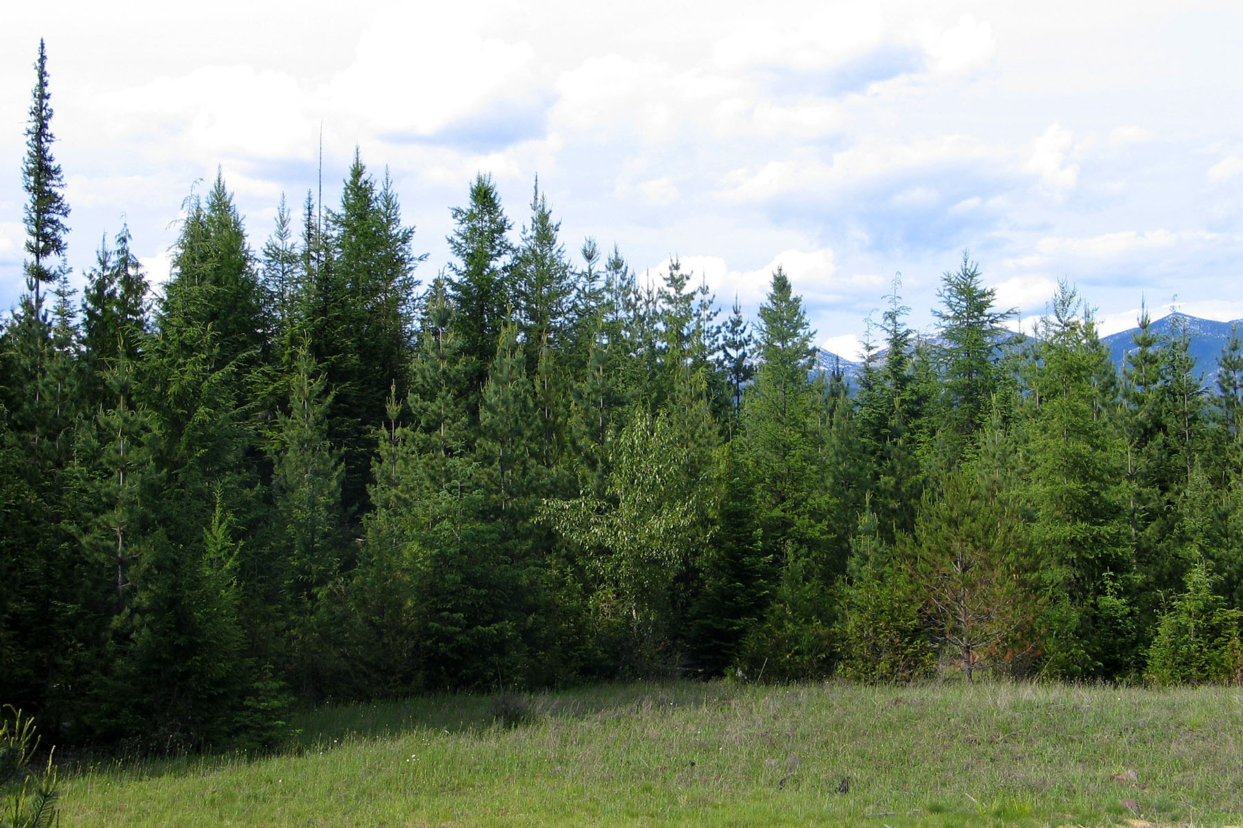 "Land for Sale at ""One of A Kind"" 238 acre Timbered Property River Run Road Clark Fork, Idaho, 83811 United States"