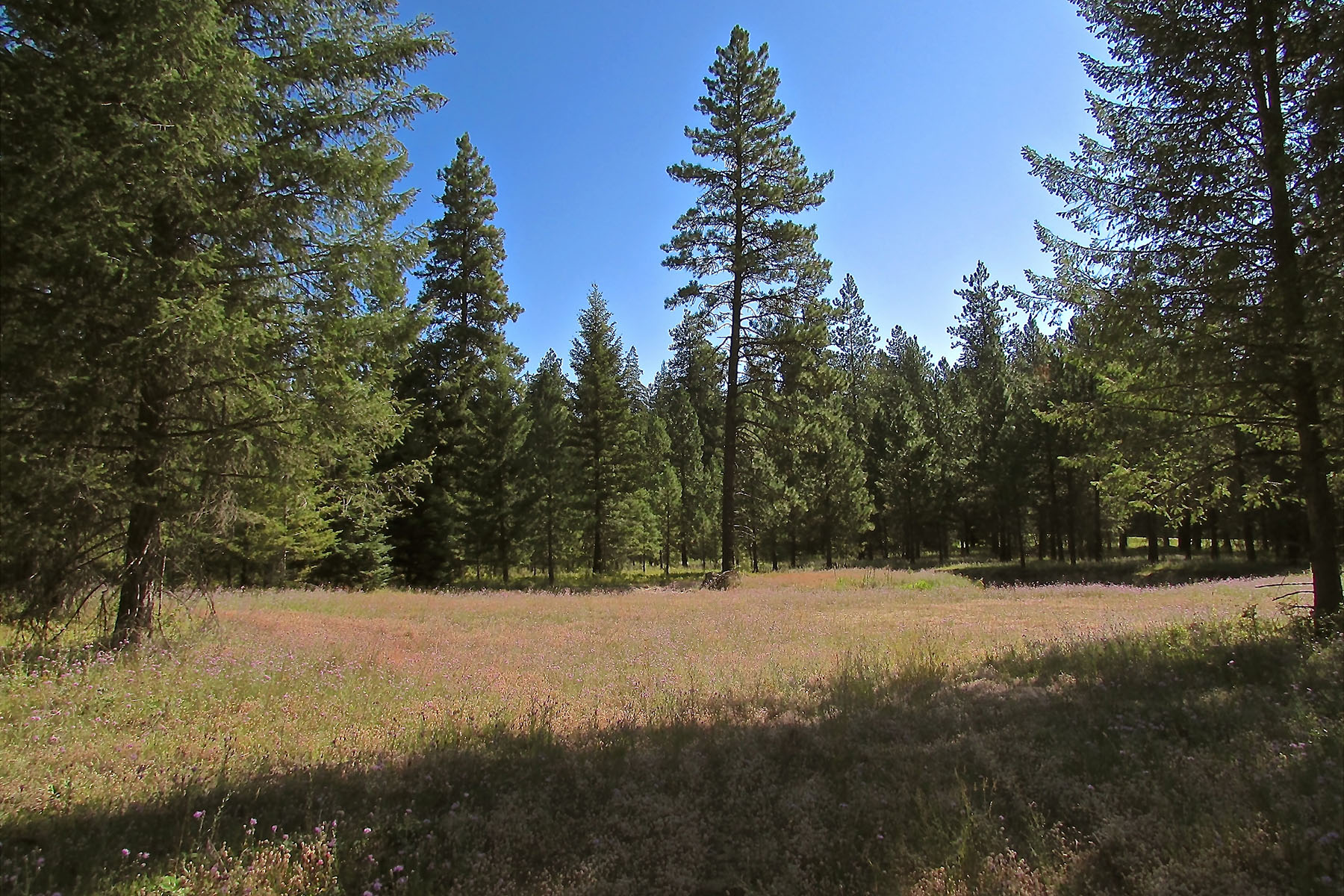 Terreno por un Venta en Beautiful 5 acres, Build your Custom Home! Lot 4 Douglas Clan Rd Priest River, Idaho, 83856 Estados Unidos